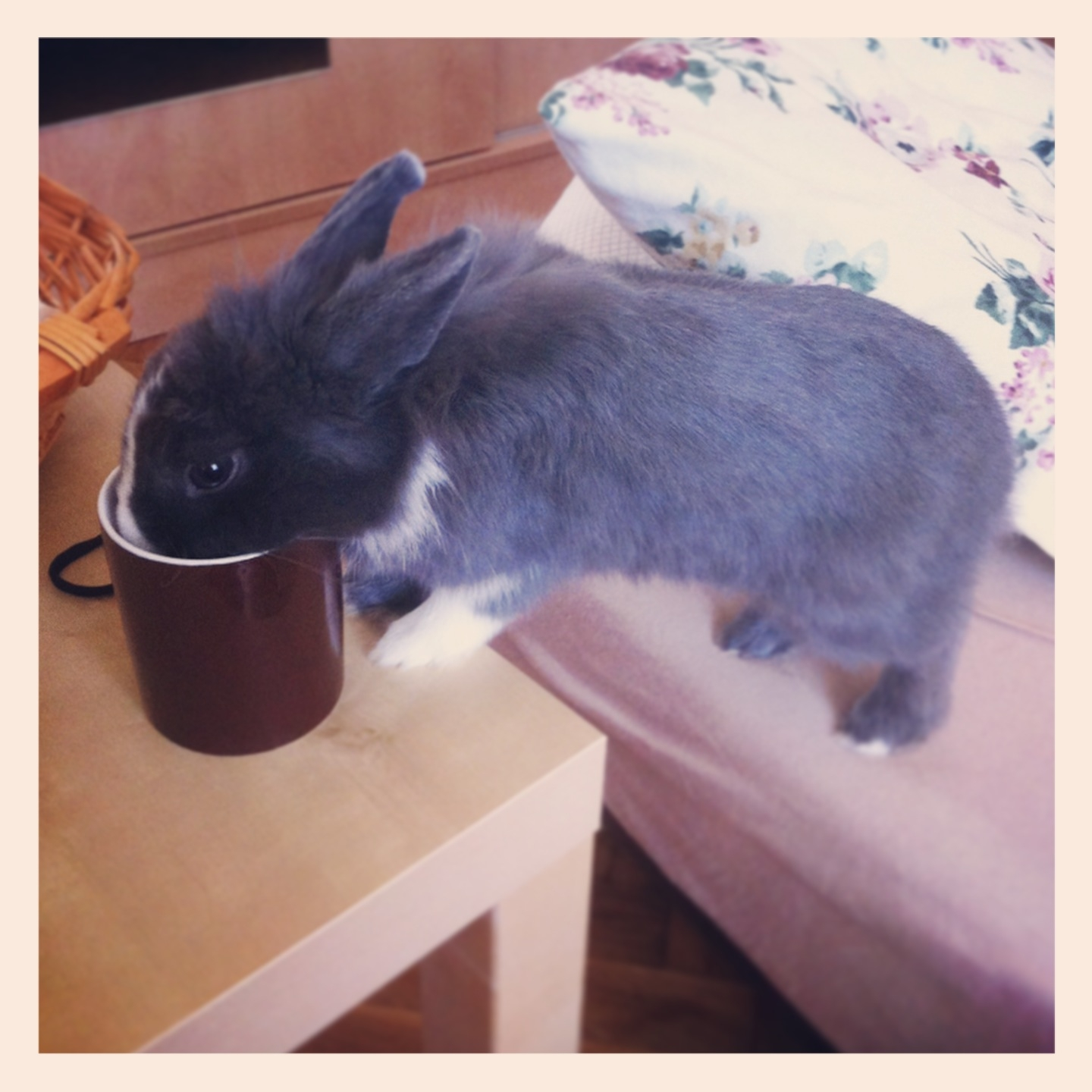 Curious Bunny Decides to Find Out What's in Human's Mug 2