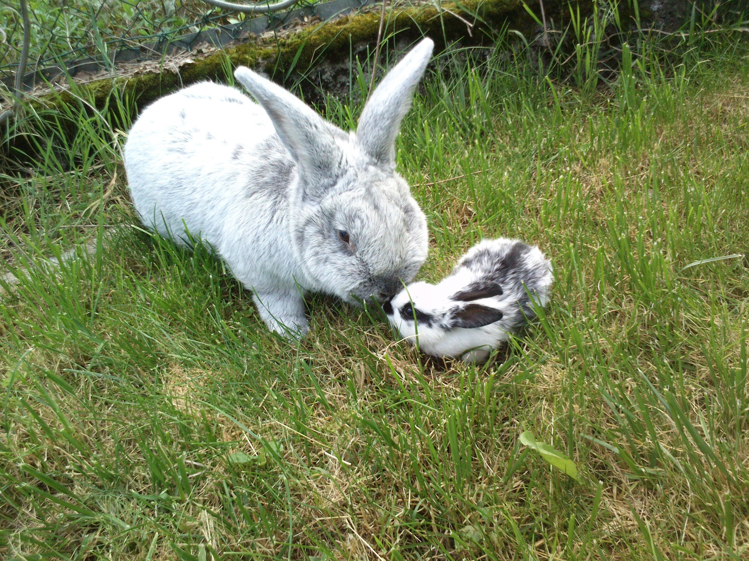 Big Bunny and Tiny Bunny Are Curious About Each Other