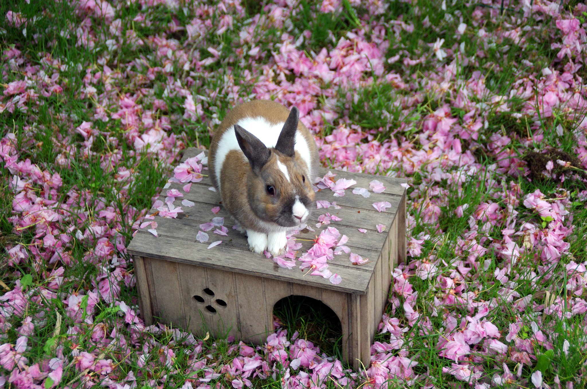 Bunny Stands on His House to Get a Better Look Around the Garden