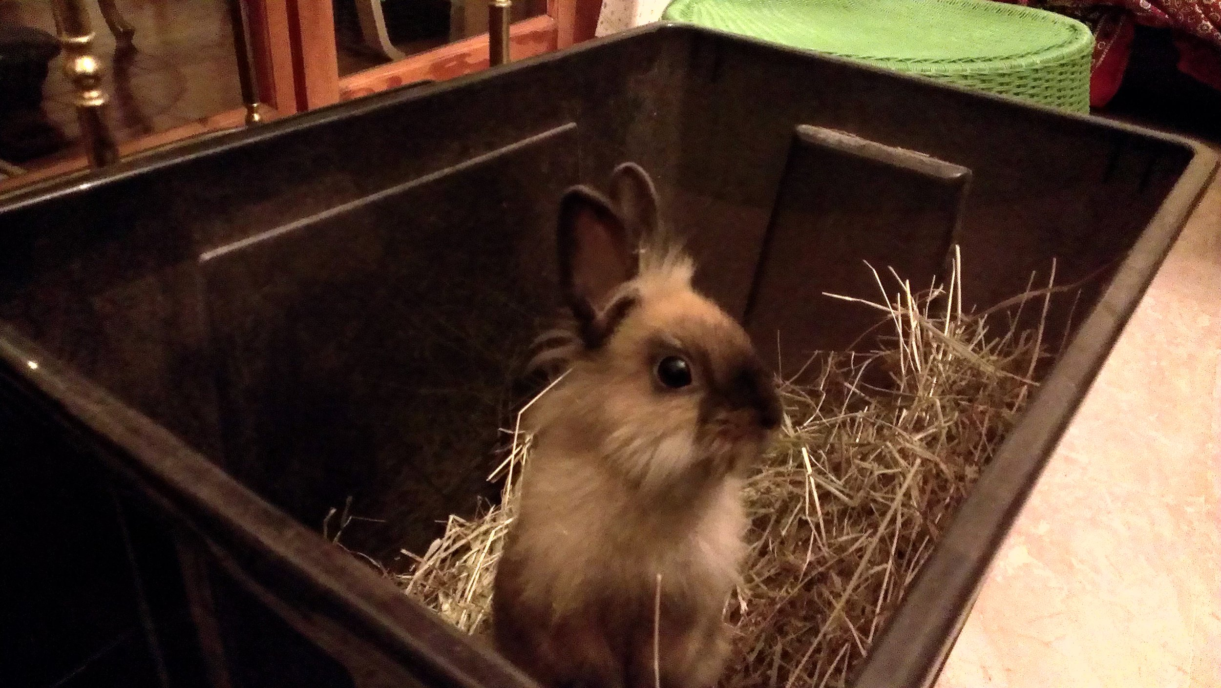 Bunny Can't Believe He Finally Found the Hay Mother Lode