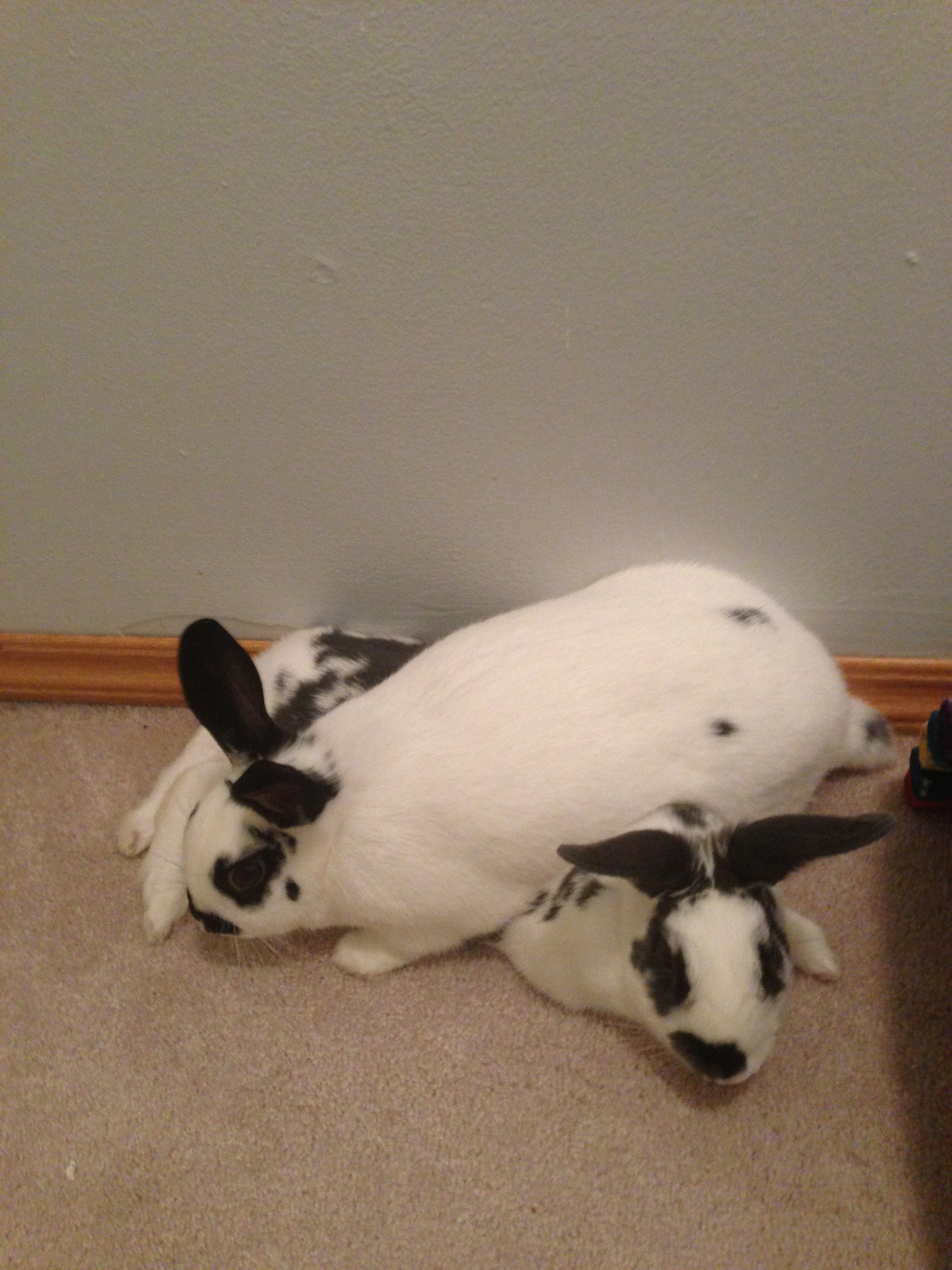 Bunny Protects His Sister from the Noisy Fireworks 2