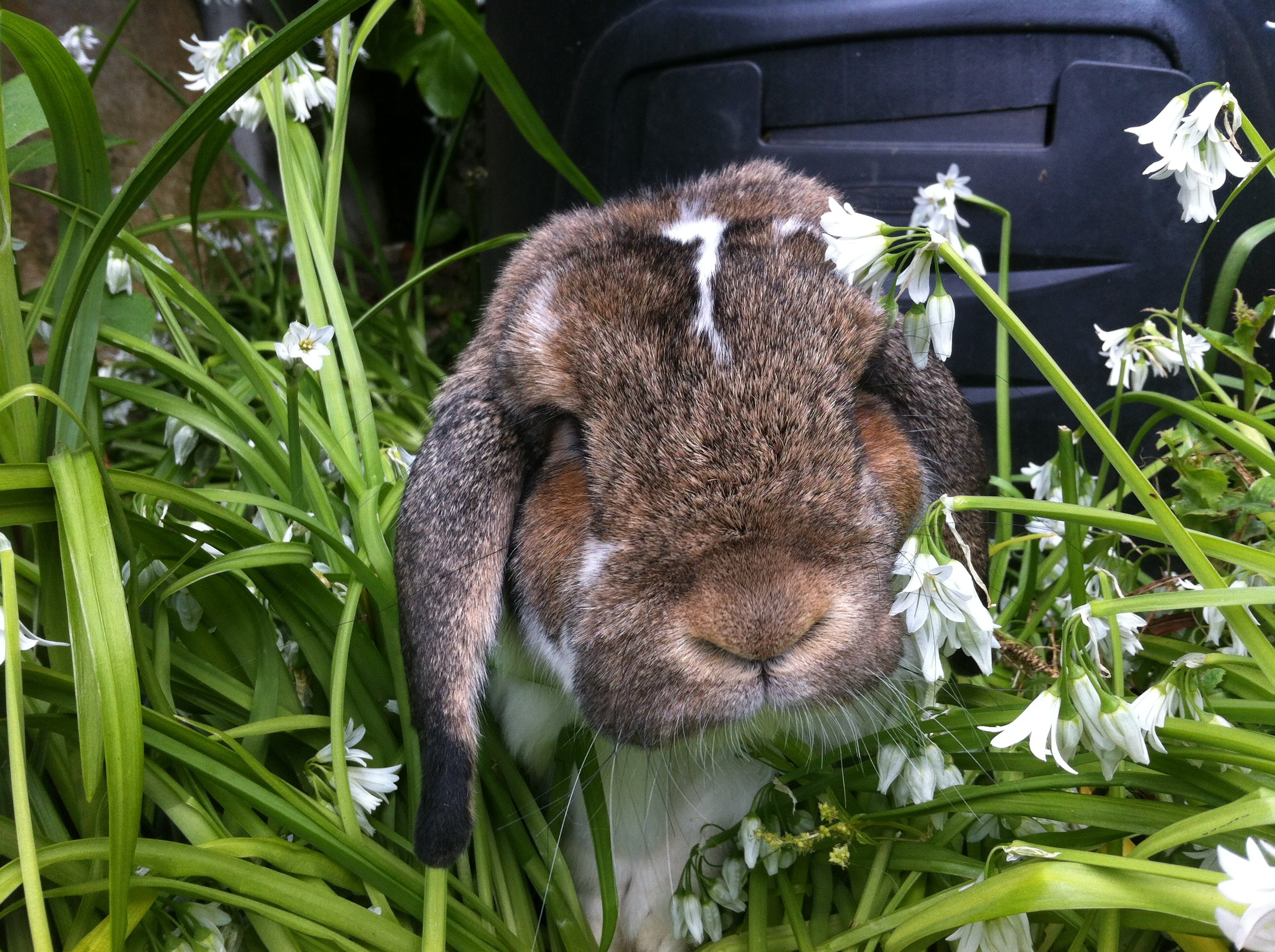 Bunny Breaks through the Tall Grass and Flowers to Nose Up to the Camera