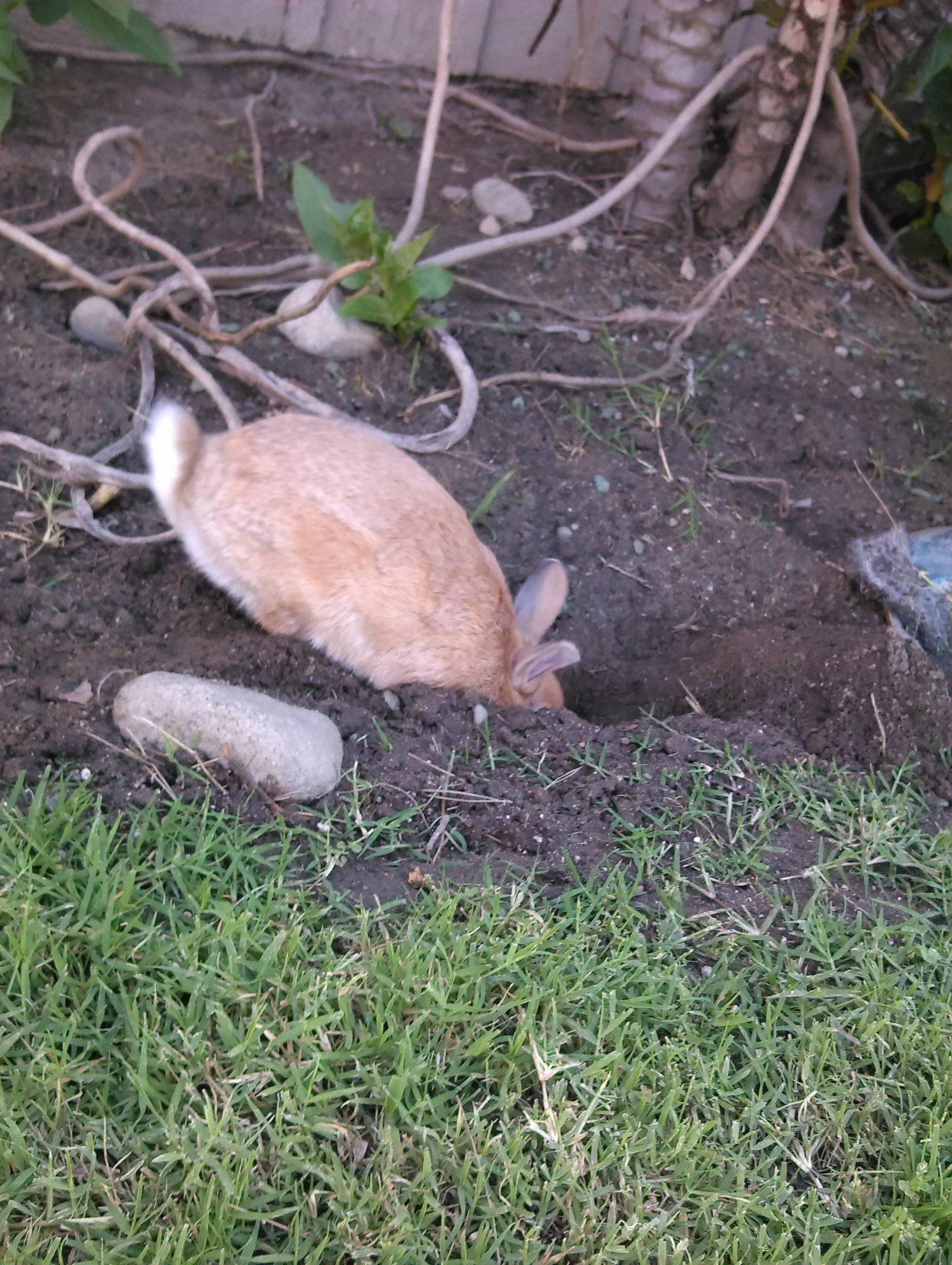 Bunny Is Having a Grand Time Digging in the Garden
