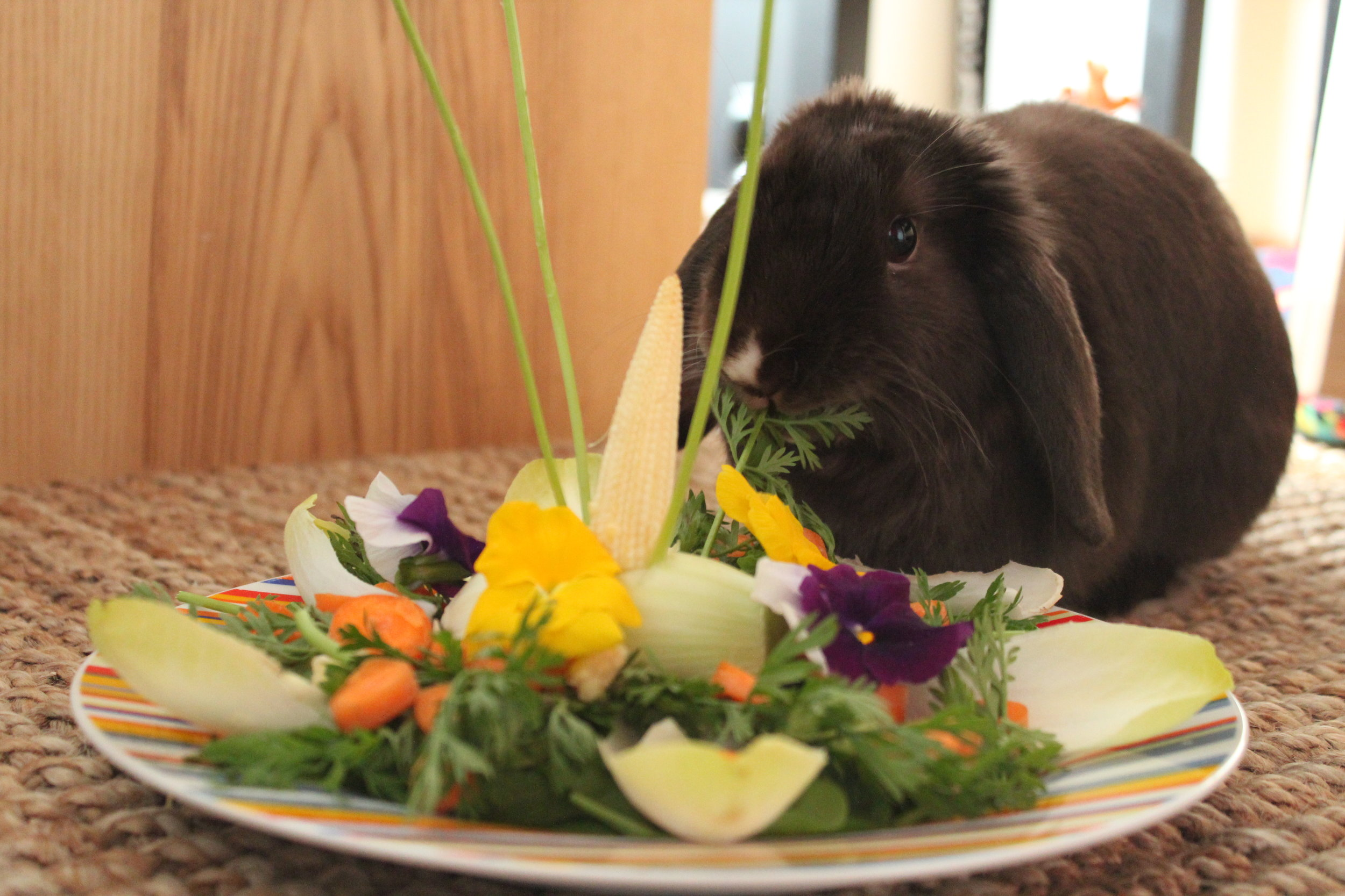 Bunny Gets a Special Meal for His Birthday 3