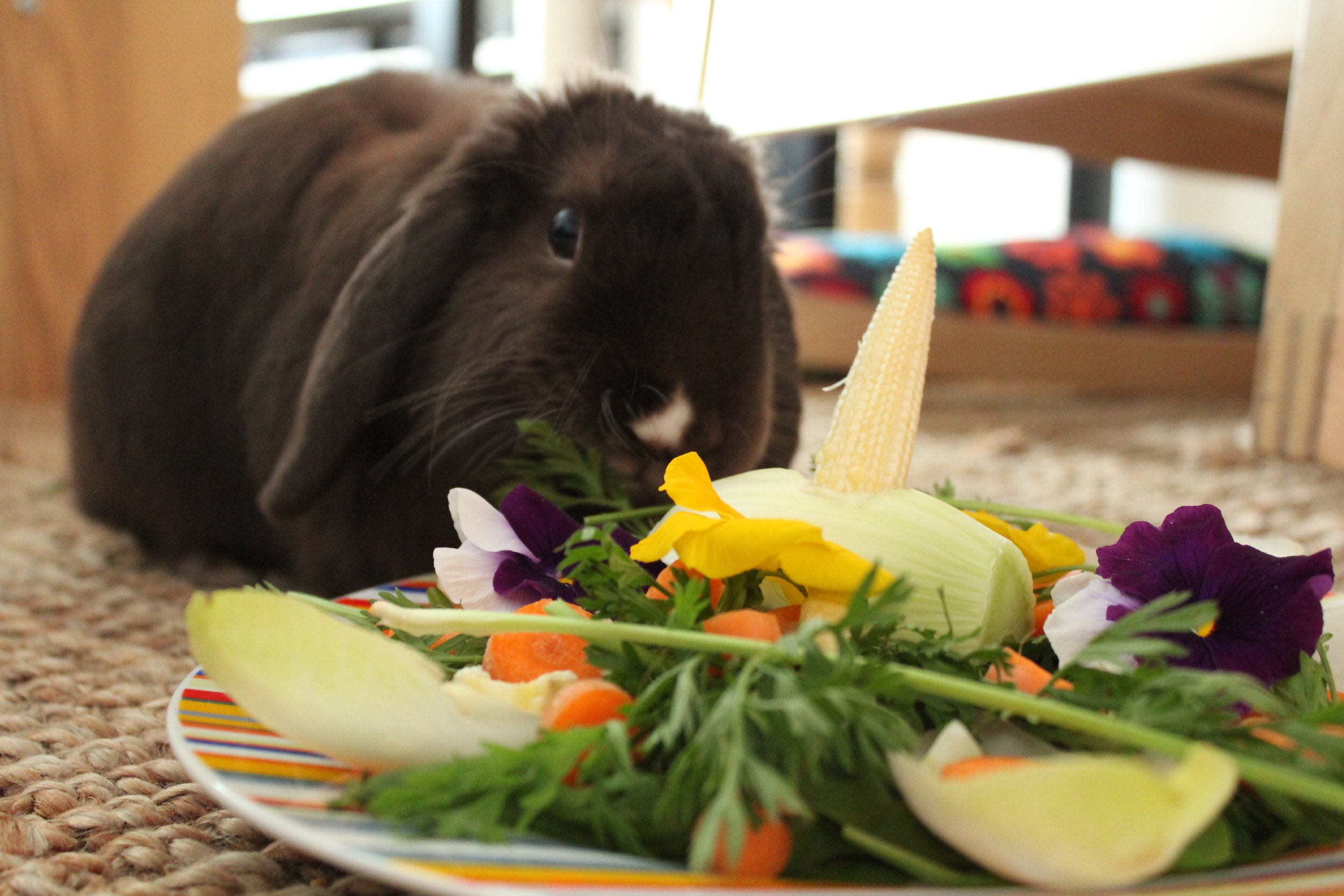 Bunny Gets a Special Meal for His Birthday 2