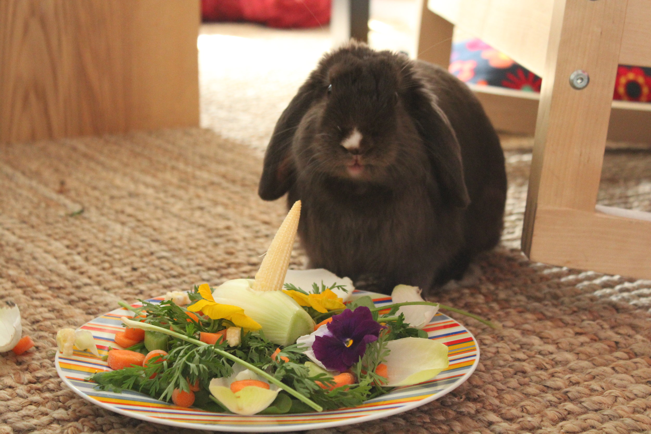 Bunny Gets a Special Meal for His Birthday 1