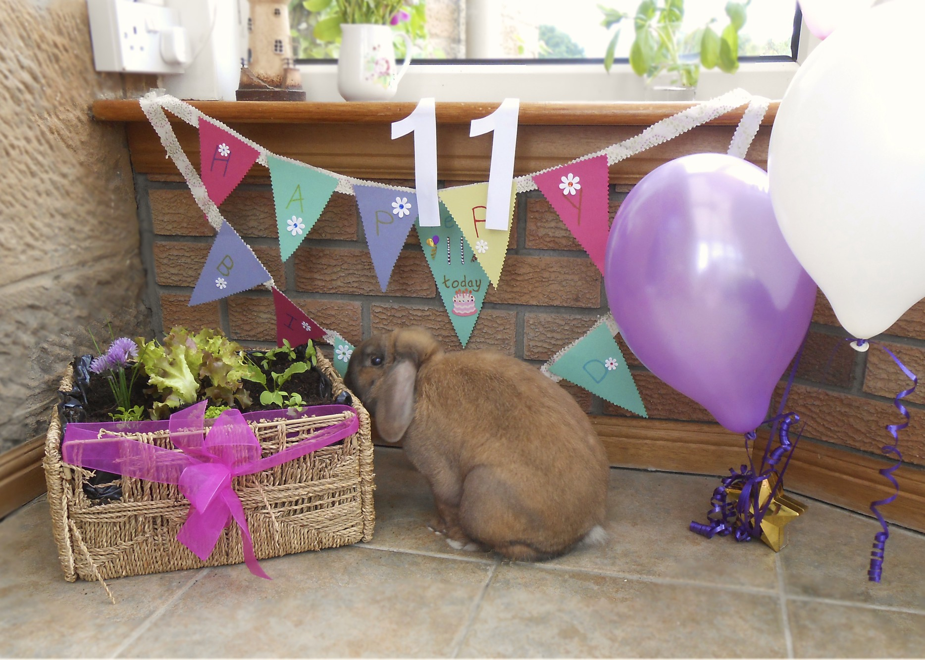 Bunny Celebrates His Eleventh Birthday with a Garden Planted in His Favorite Chewable Basket