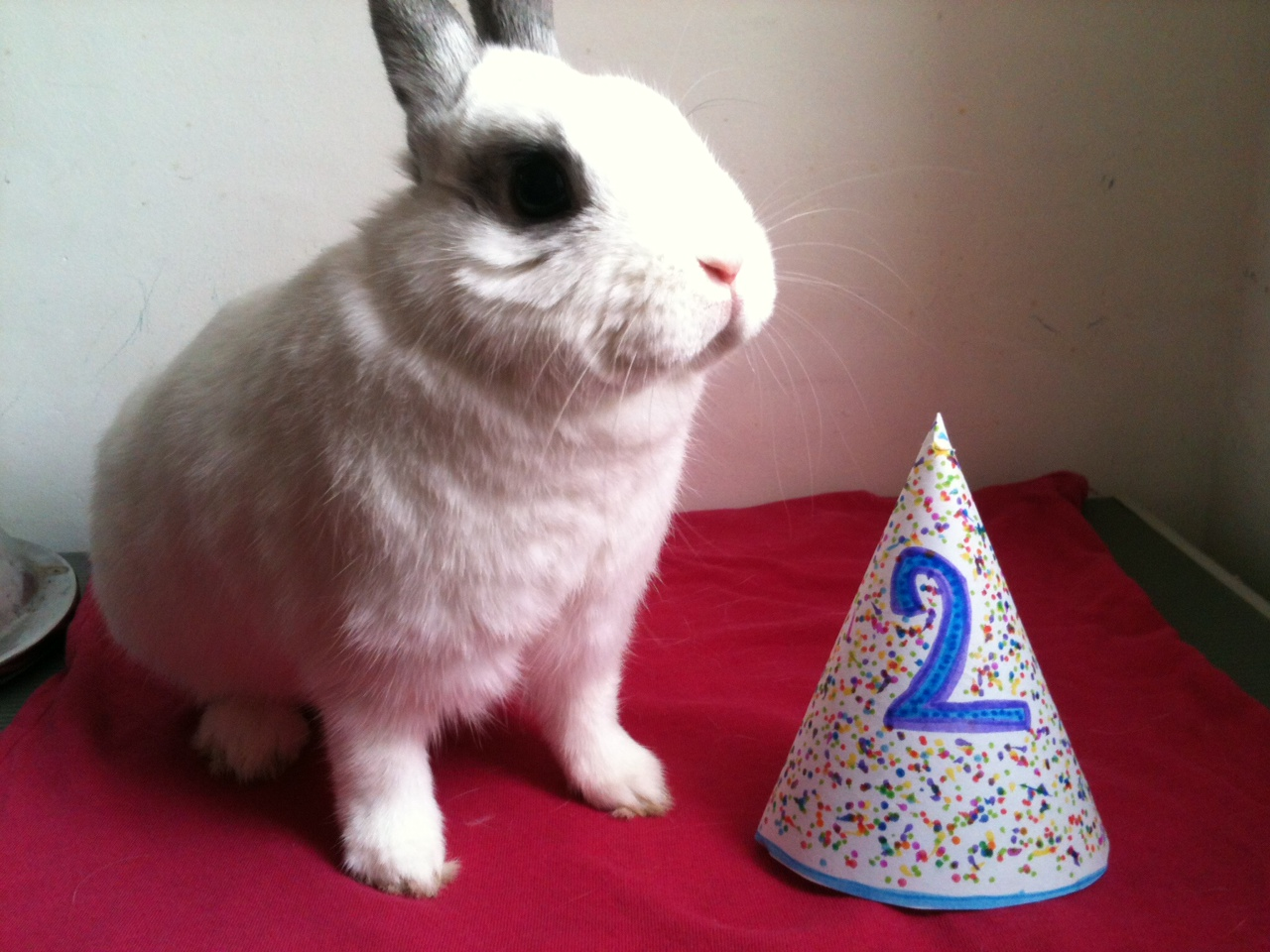 Bunny Gets a Special Birthday Hat Made for Him