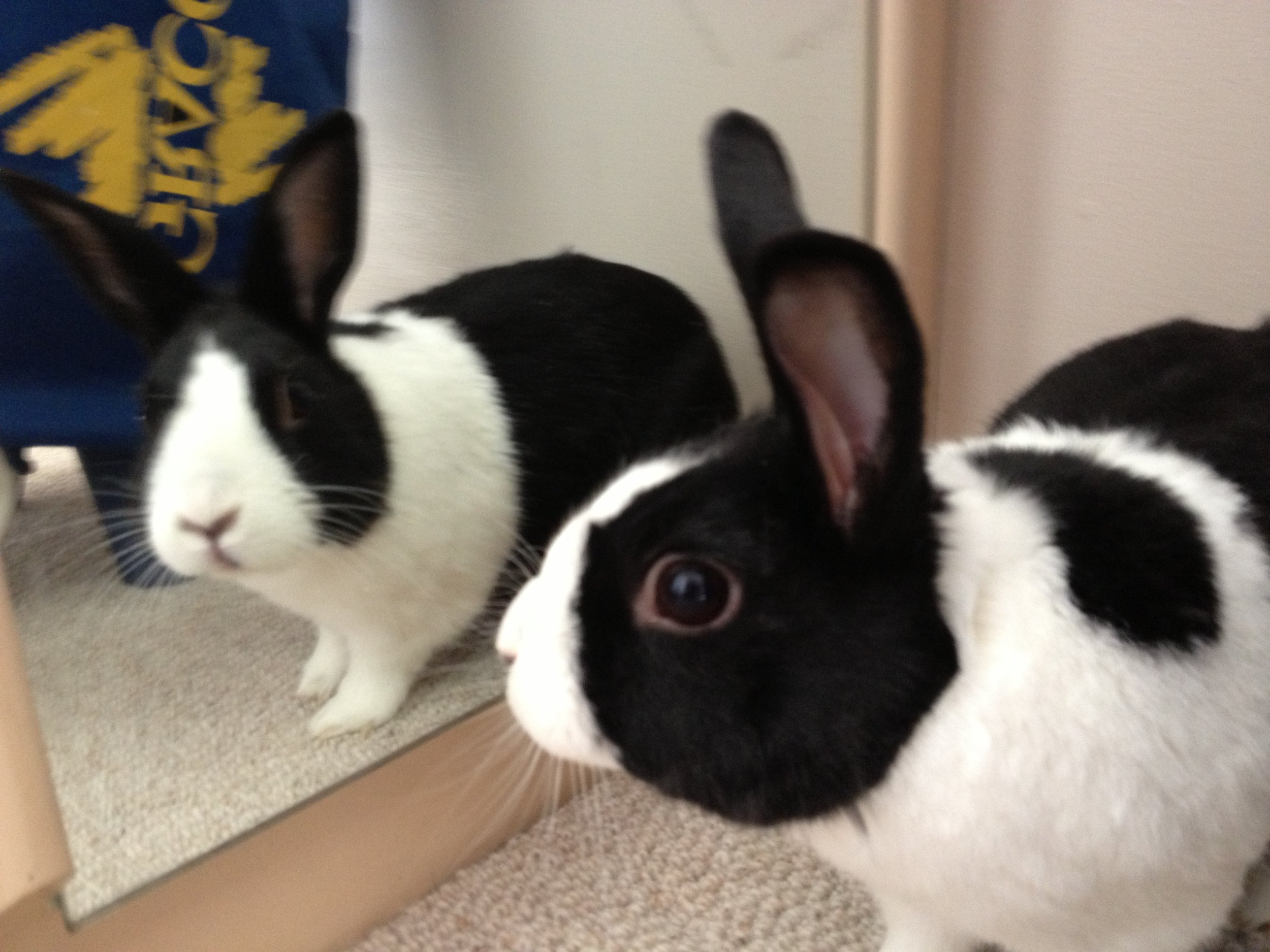 Bunny Is Suddenly Distracted by the Sight of a Very Handsome Bun
