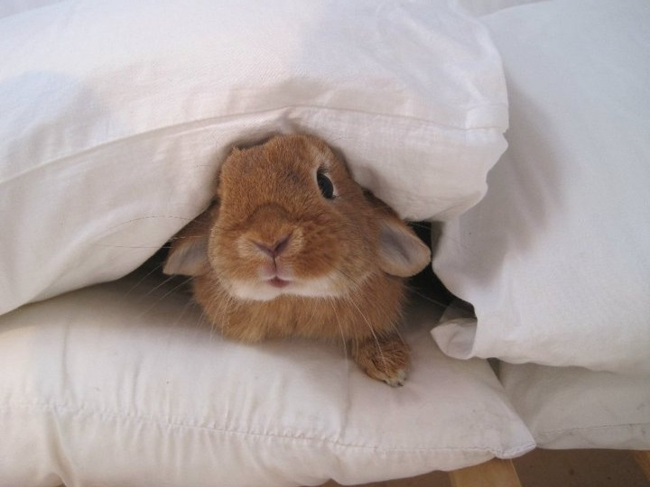 Boo! There's a Bunny in Your Pillows!