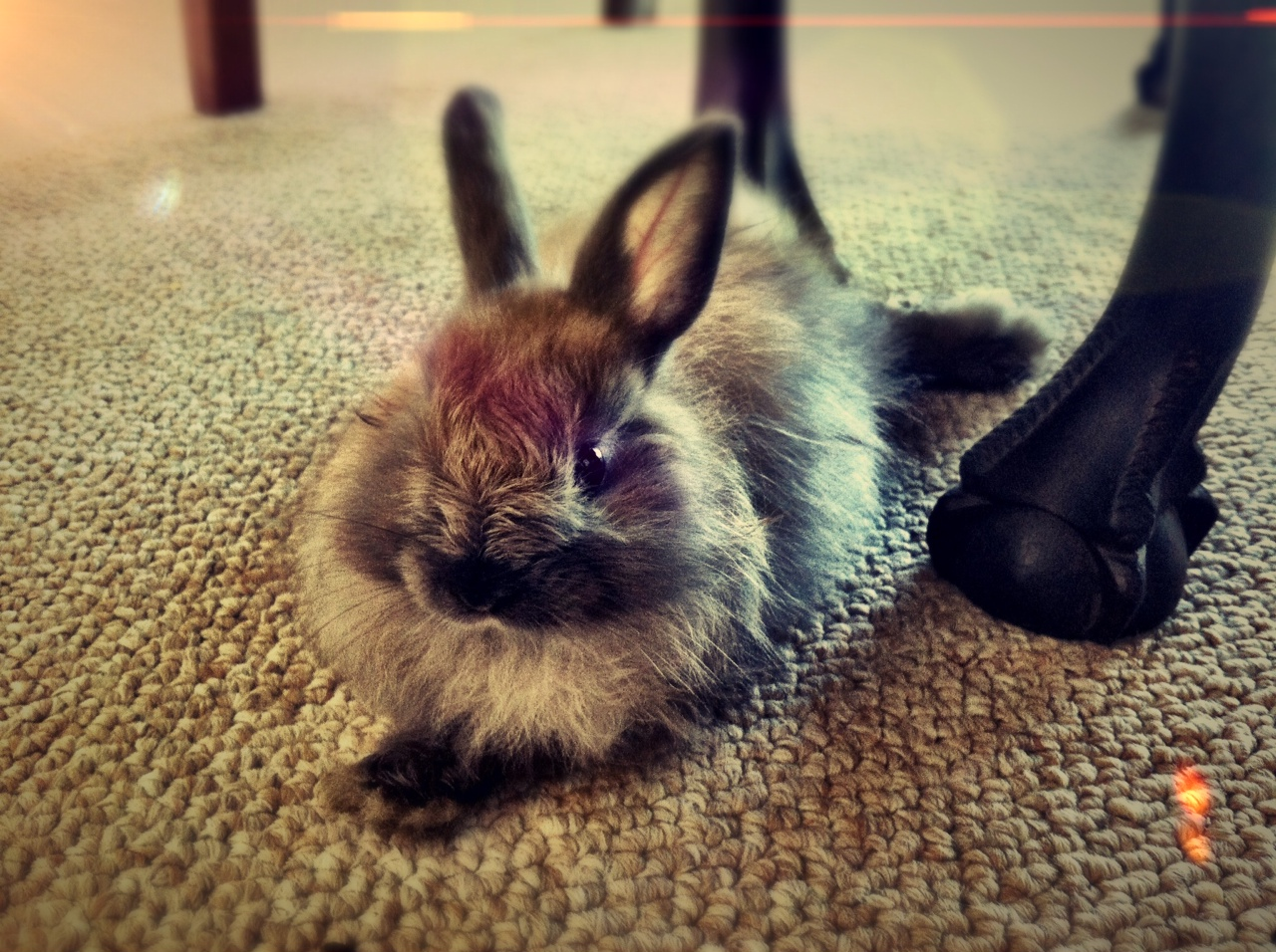 Fuzzy Bunny Relaxes on the Fuzzy Rug
