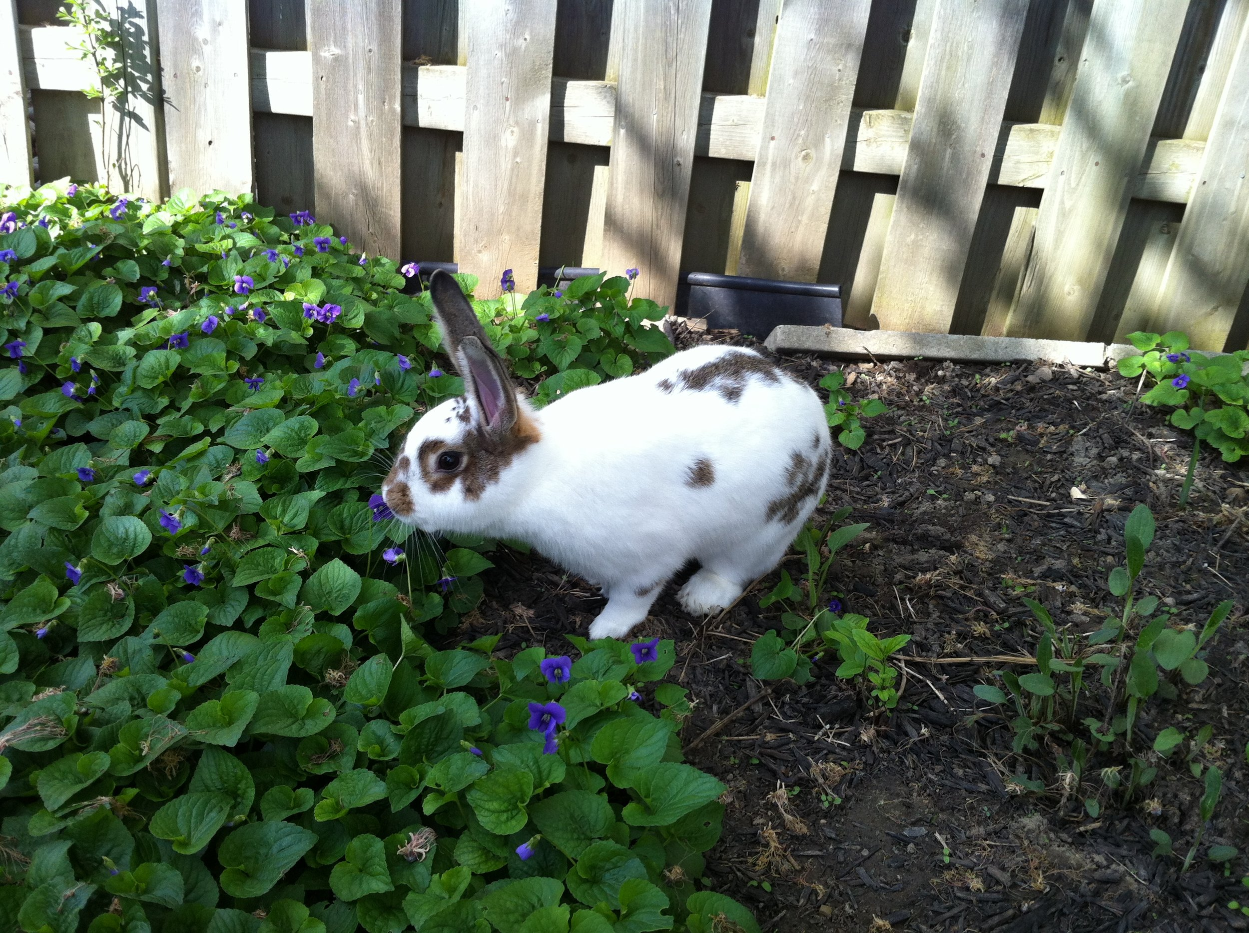Botanist Bunny Identifies a Flower by Its Scent