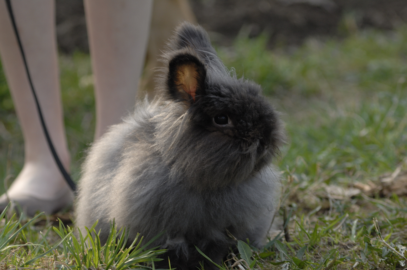 Super-Fluffy Bunny Gets Some Outdoor Time