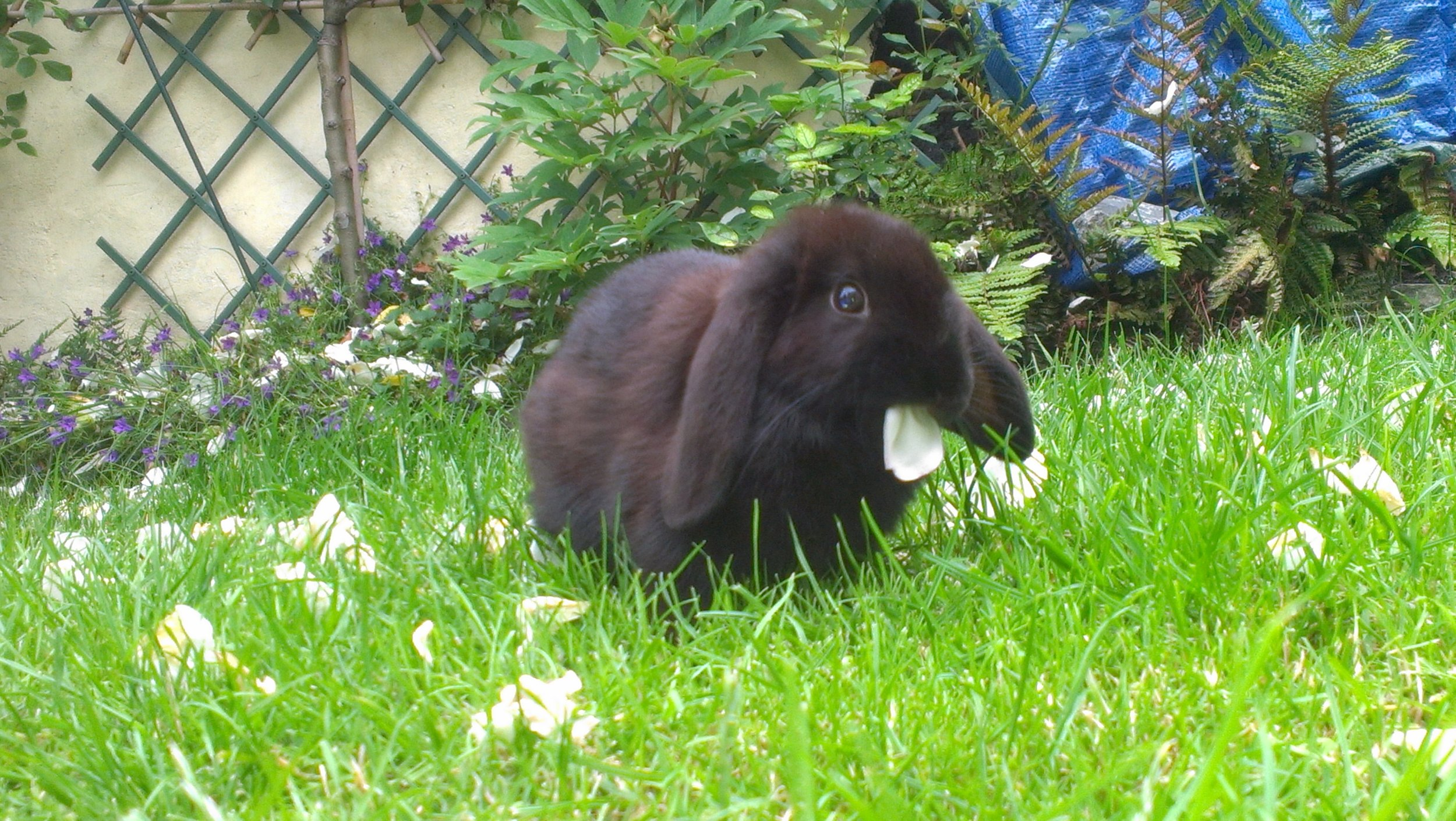 Bunny's Been Caught Eating a Flower Petal!