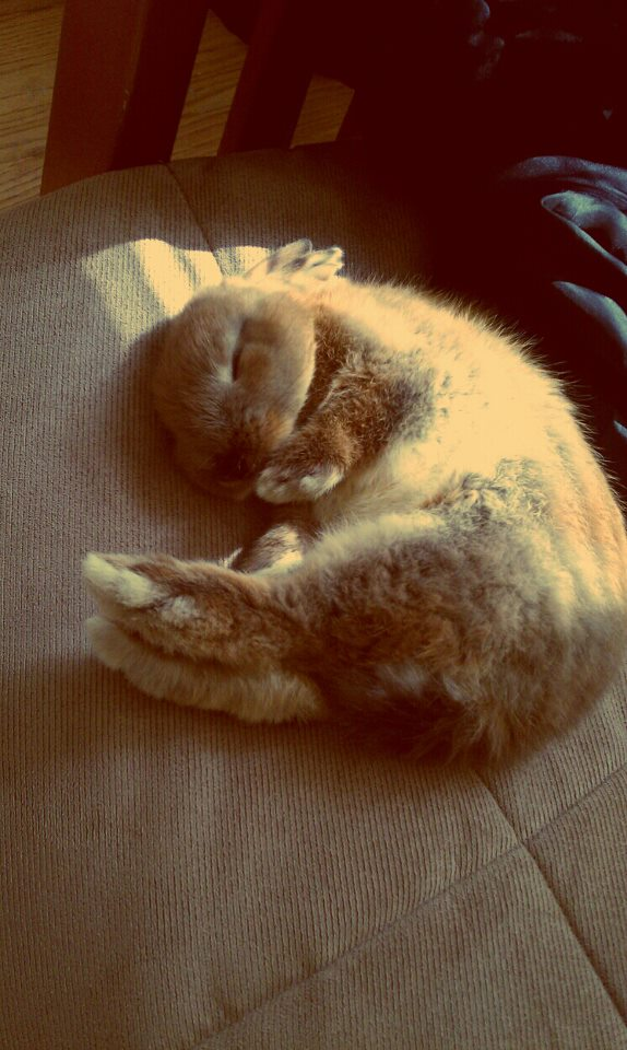 Bunny Sure Knows How to Curl Up and Relax 1