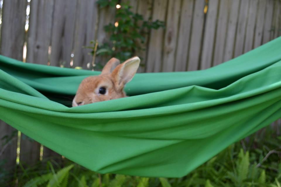 Bunny Explores a Hammock