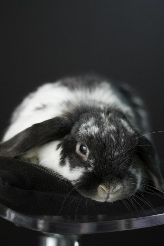 Model Bunny Has a Very Professional Photoshoot 3