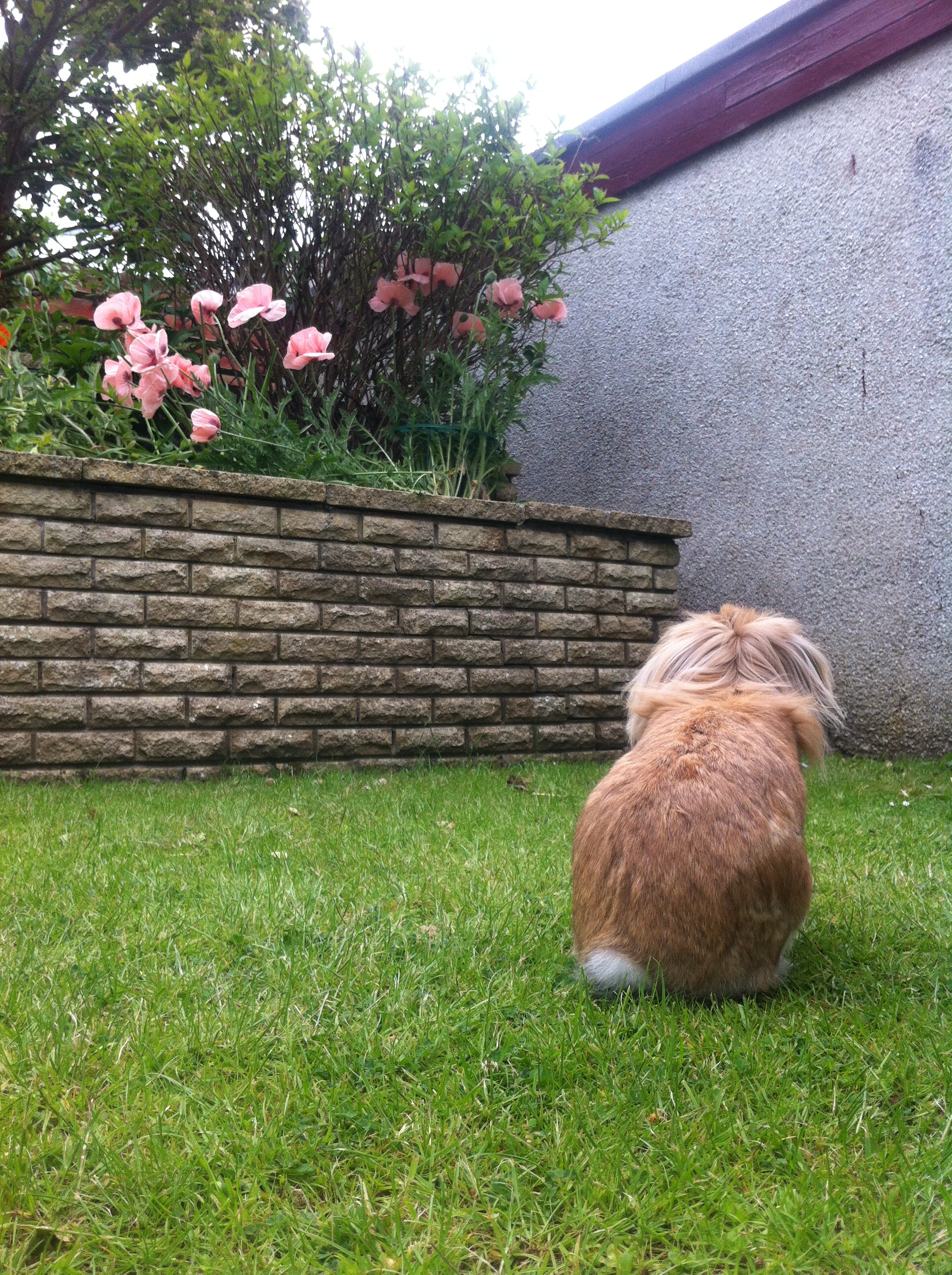 Bunny Searches High and Low for a Way into the Flowerbed 2