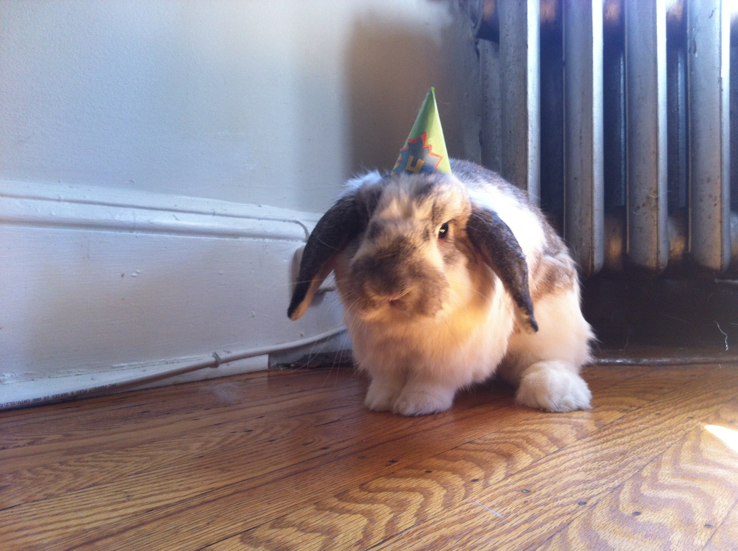 Bunny Freshens Up Before His Birthday Celebrations Get Started 3