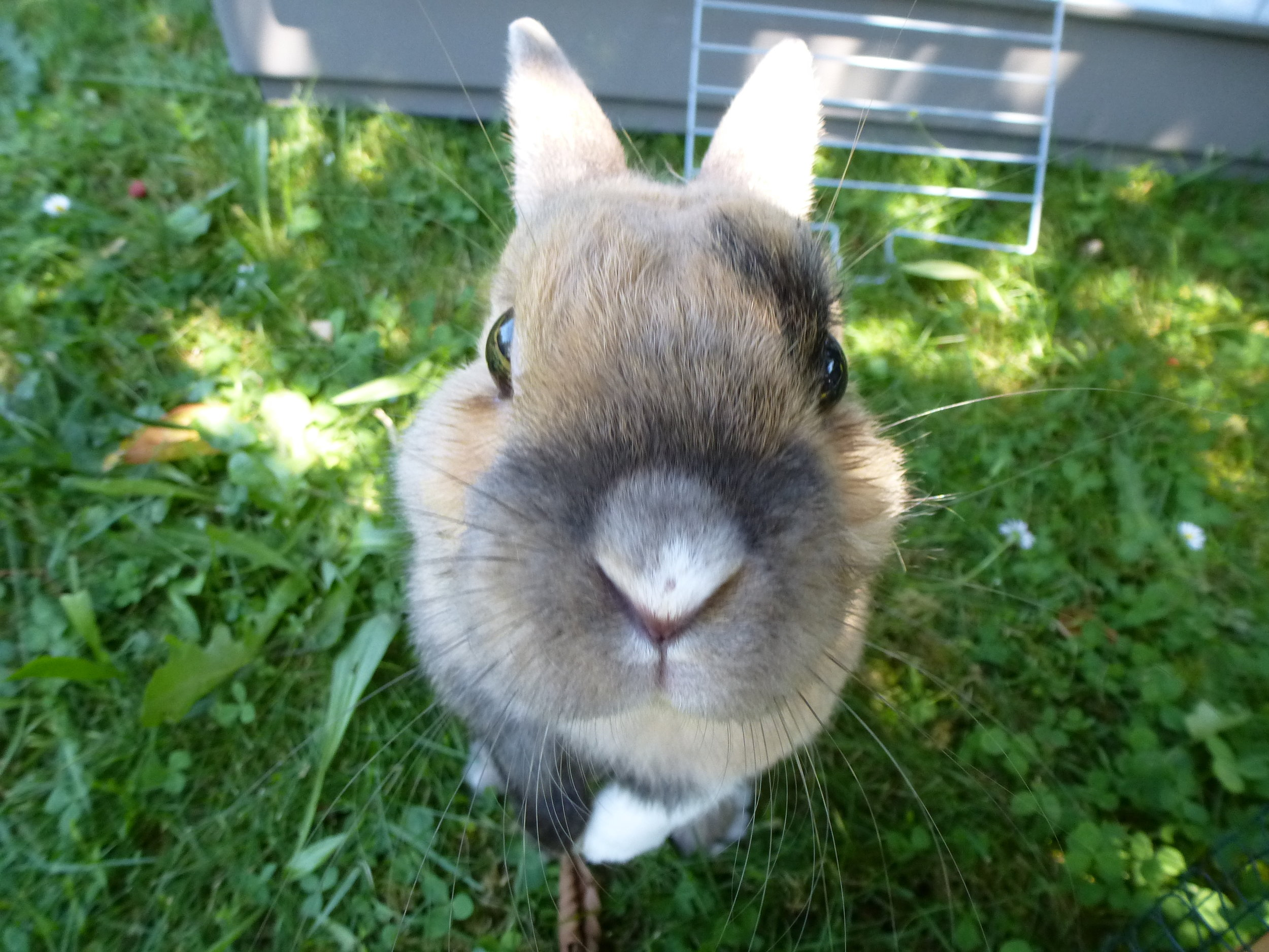 Bunny Reaches Up, Up, Up Toward the Camera