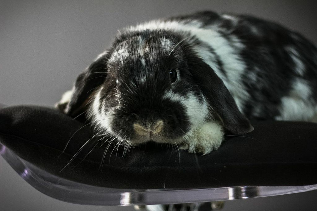 Model Bunny Has a Very Professional Photoshoot 1