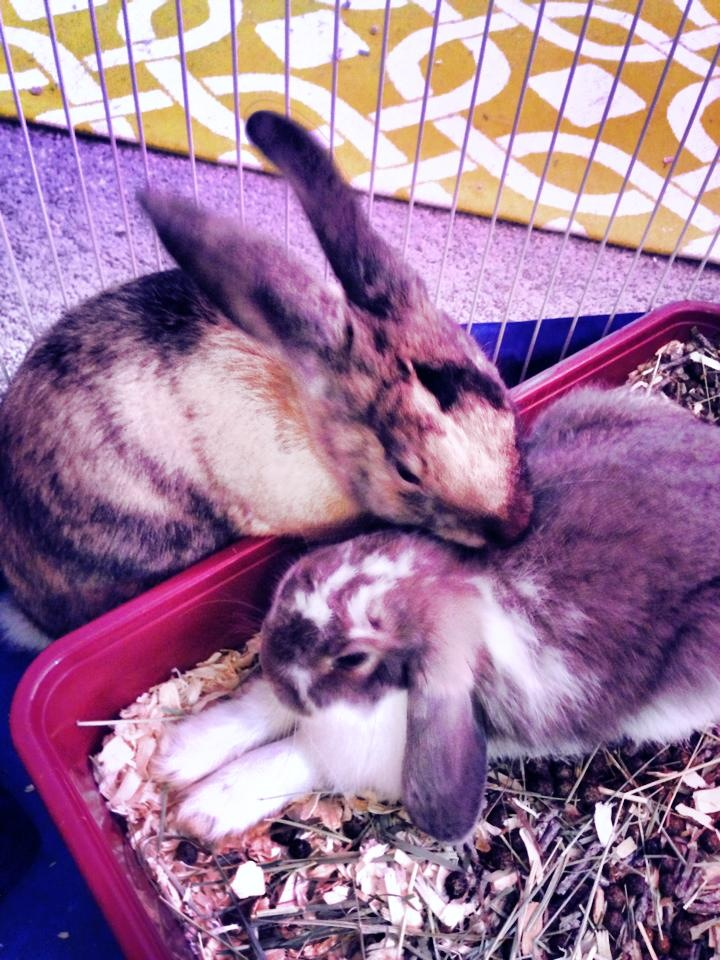 Bunny Welcomes His New Adopted Brother with a Bit of Grooming 1
