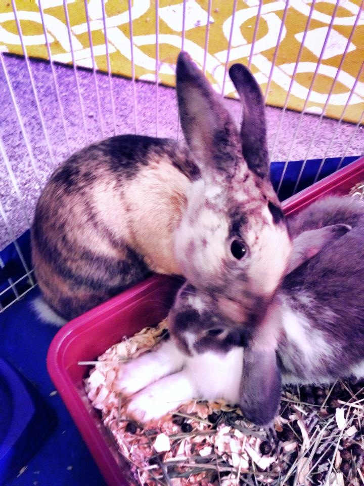 Bunny Welcomes His New Adopted Brother with a Bit of Grooming 2