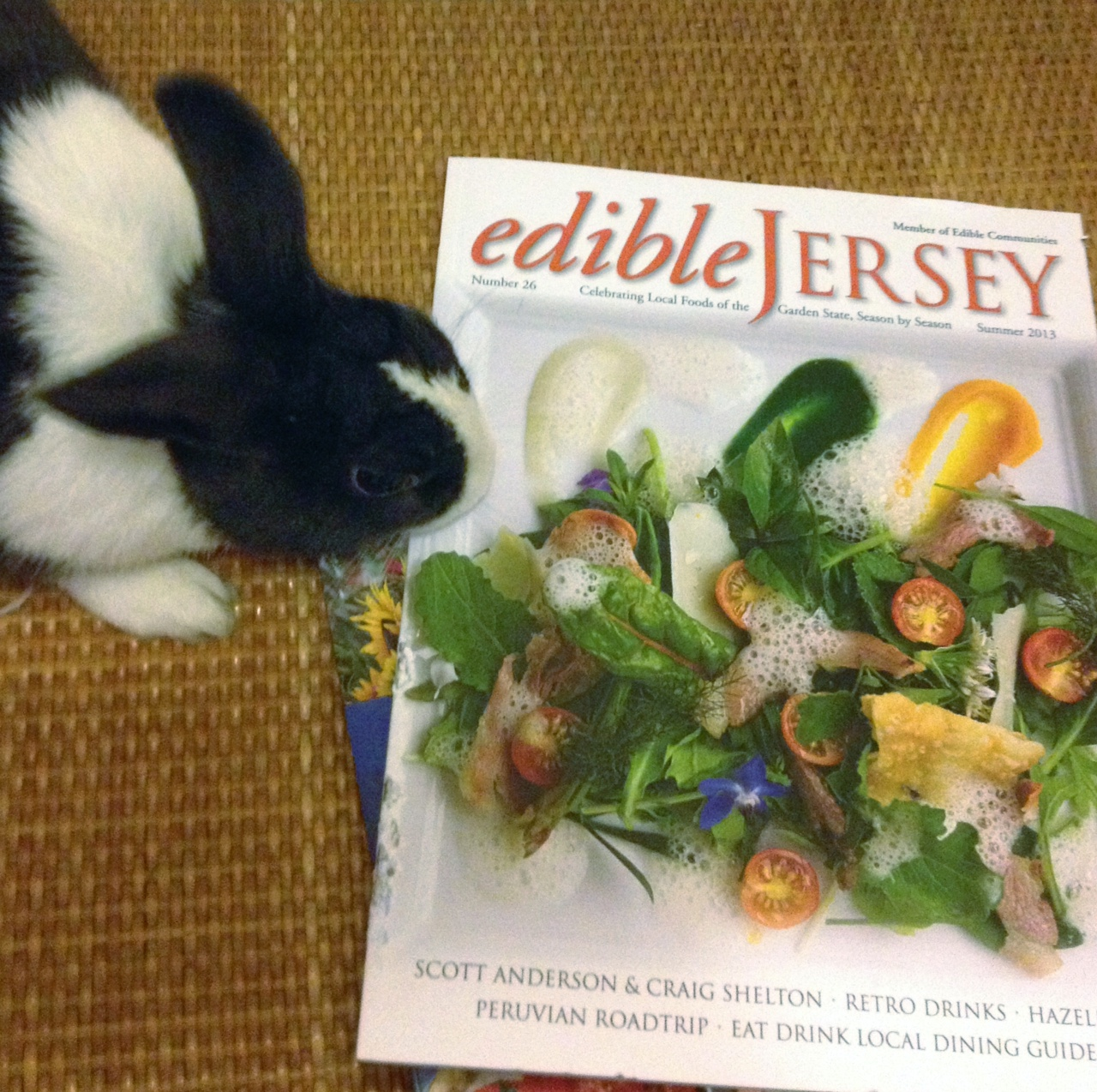 Bunny, Edible Magazine Isn't Meant to be Actually Eaten