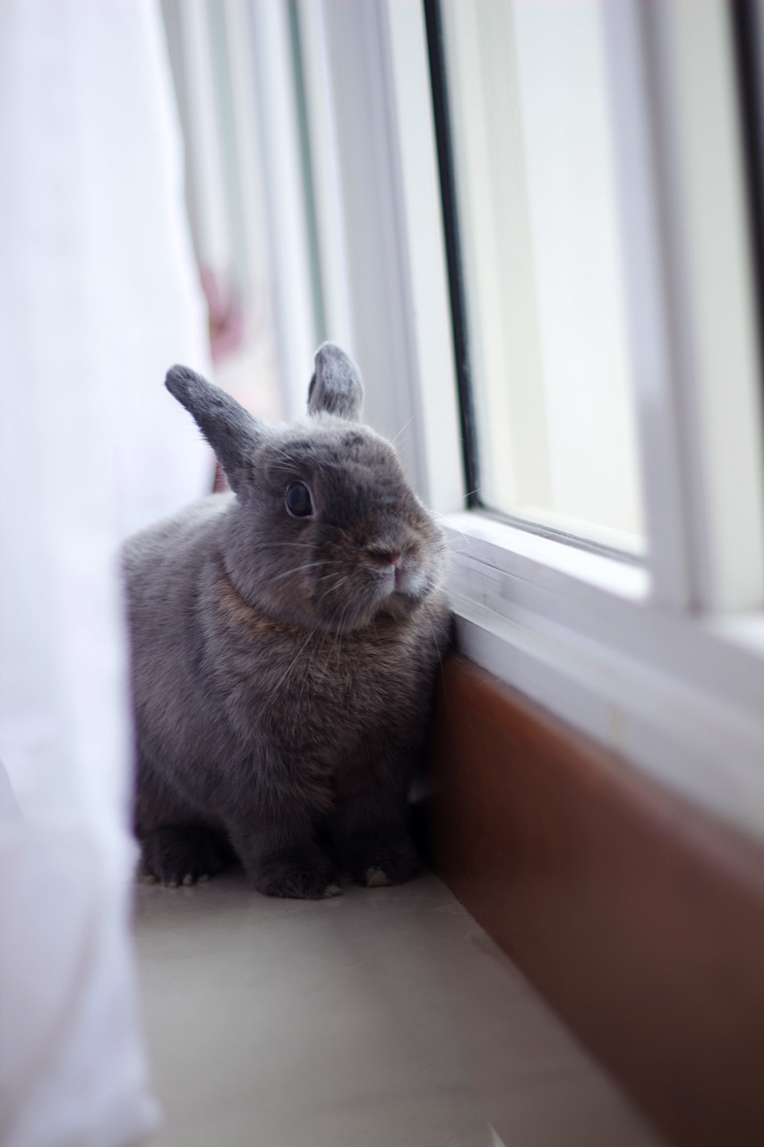 You've Found Bunny Behind the Curtains!