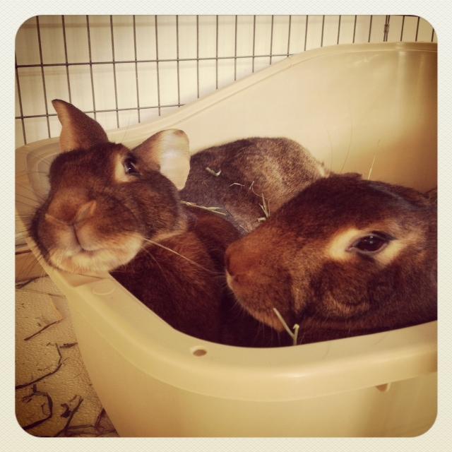Bunnies Can Lean on Their Friends 2