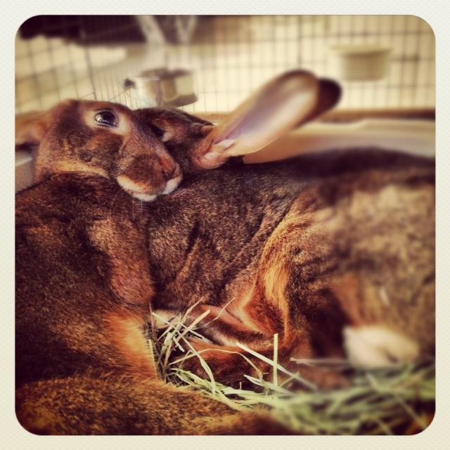 Bunnies Can Lean on Their Friends