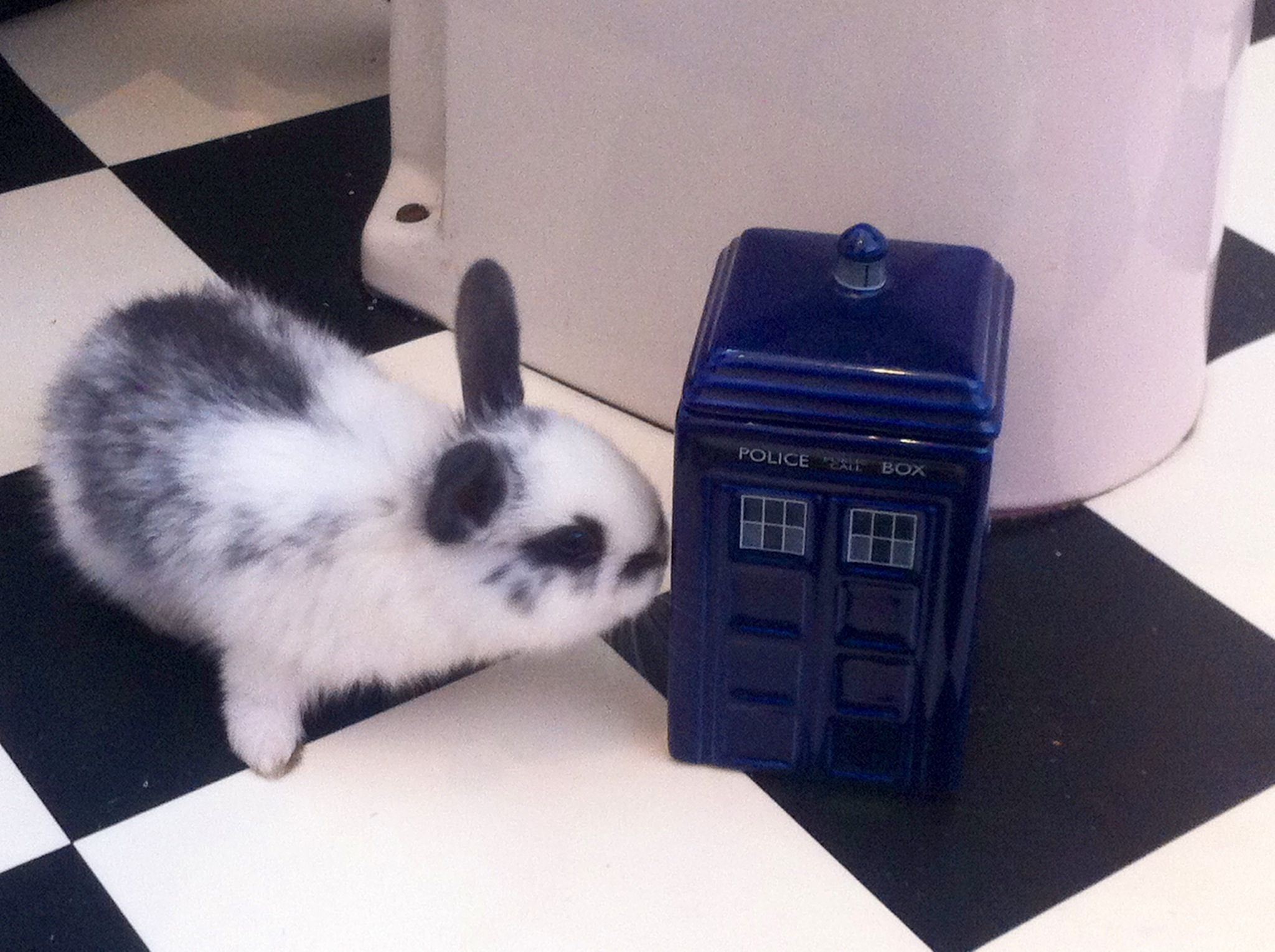 Bunny Checks Out the Tardis