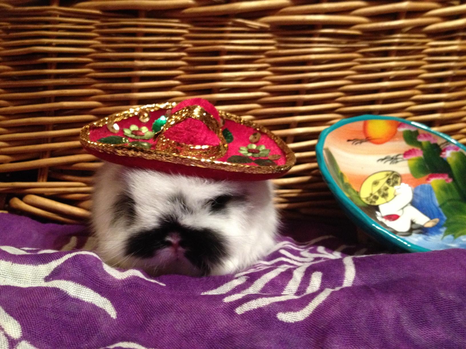 Bunny Has a Bunny-Sized Sombrero