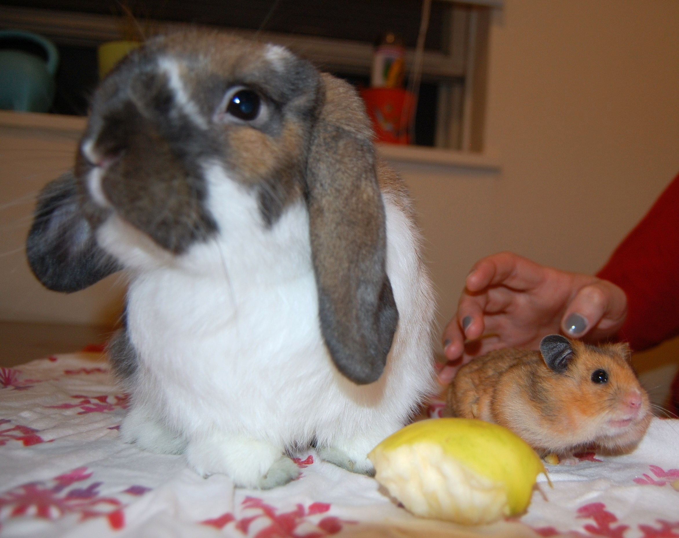 It Is Hard Getting Bunny and Hamster to Take a Nice Photo Together 1