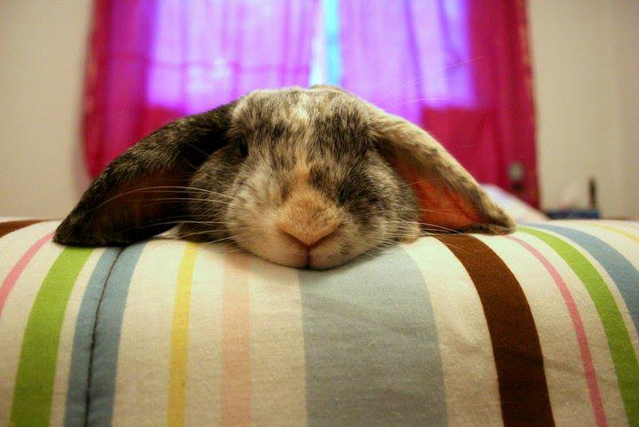 Bunny Feels Like Having a Lazy Day