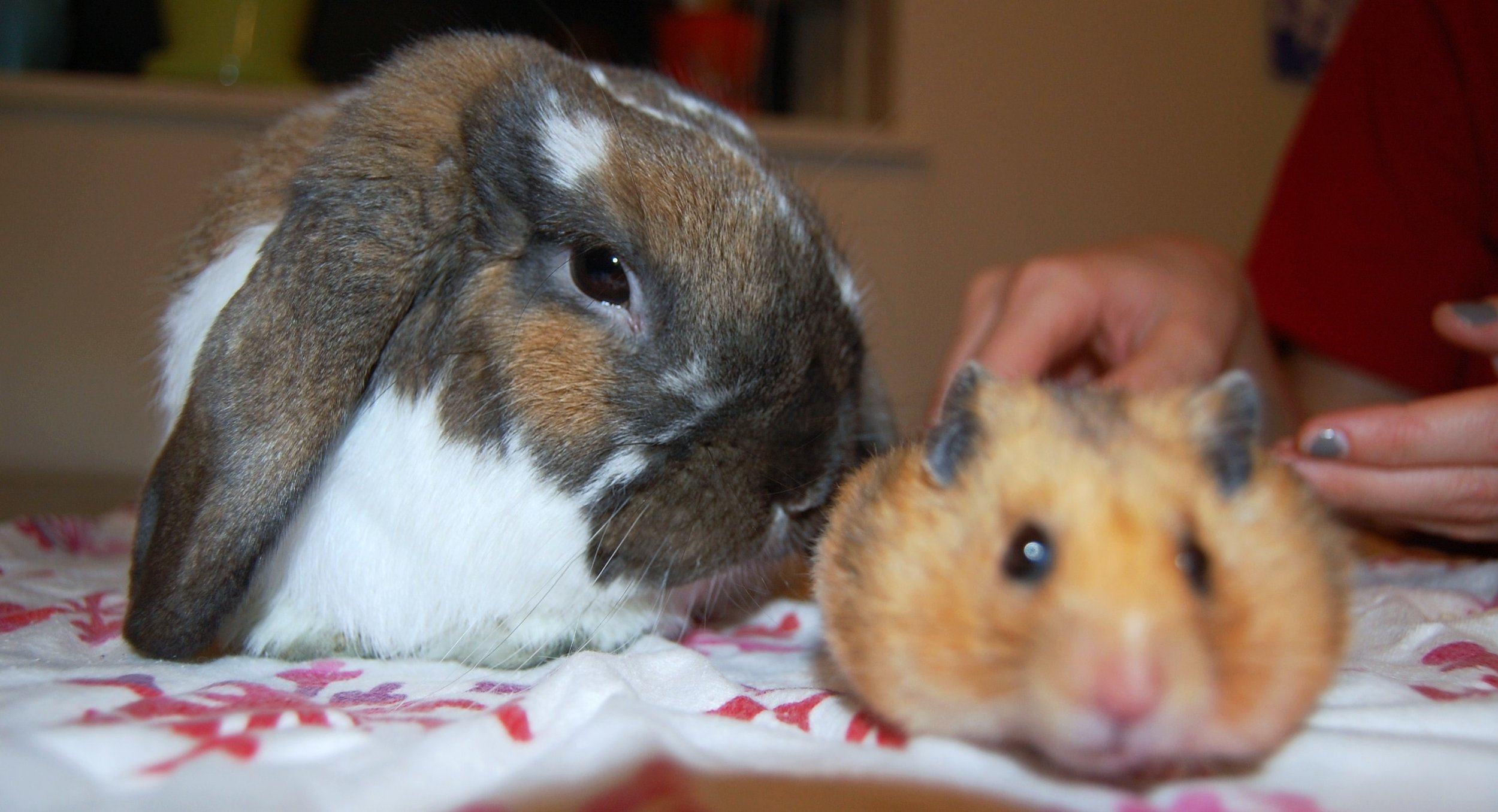 It Is Hard Getting Bunny and Hamster to Take a Nice Photo Together 2
