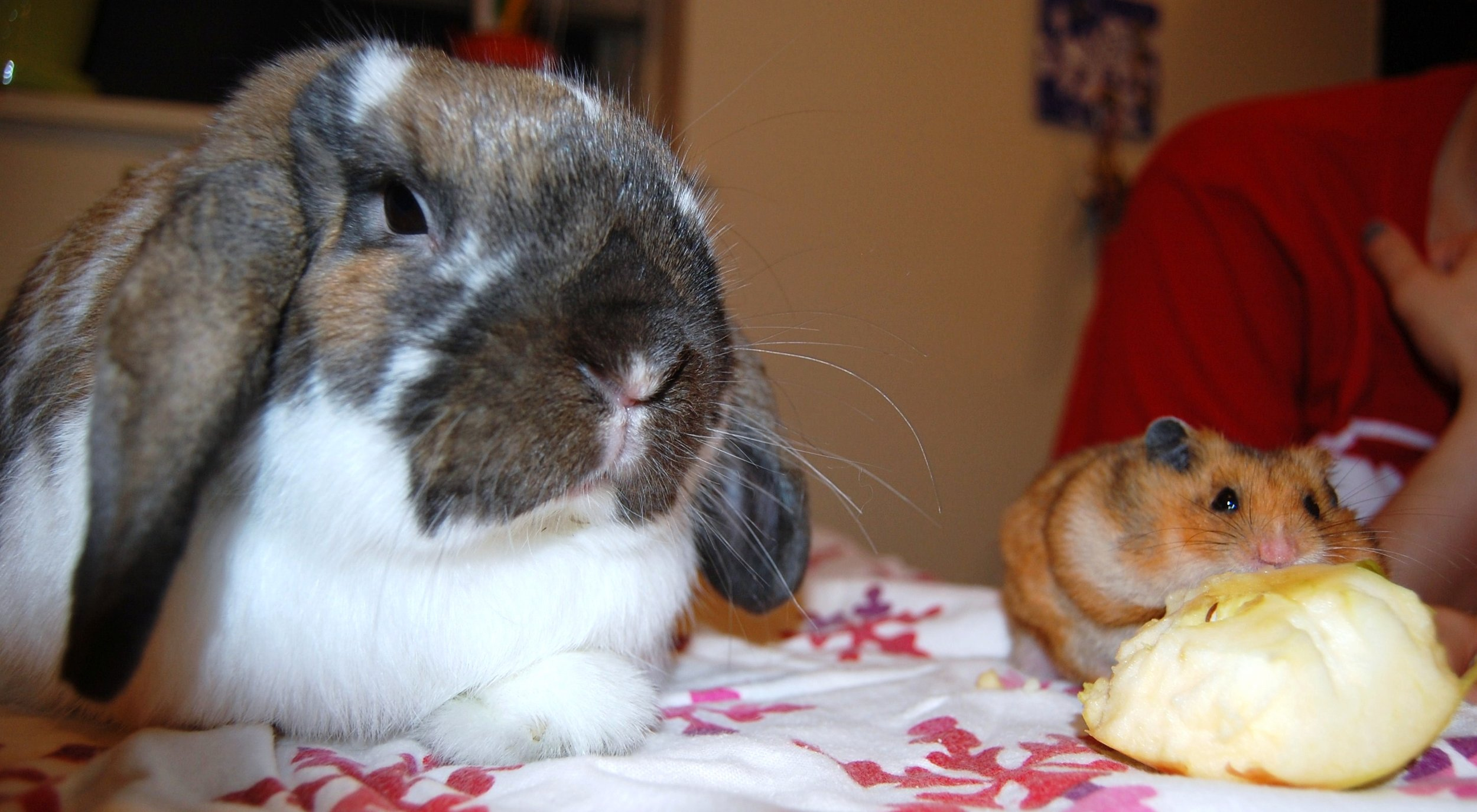 It Is Hard Getting Bunny and Hamster to Take a Nice Photo Together 3