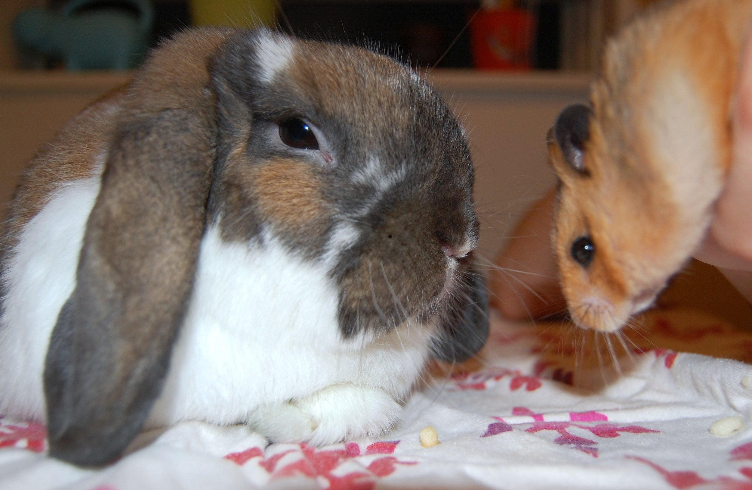 It Is Hard Getting Bunny and Hamster to Take a Nice Photo Together 4