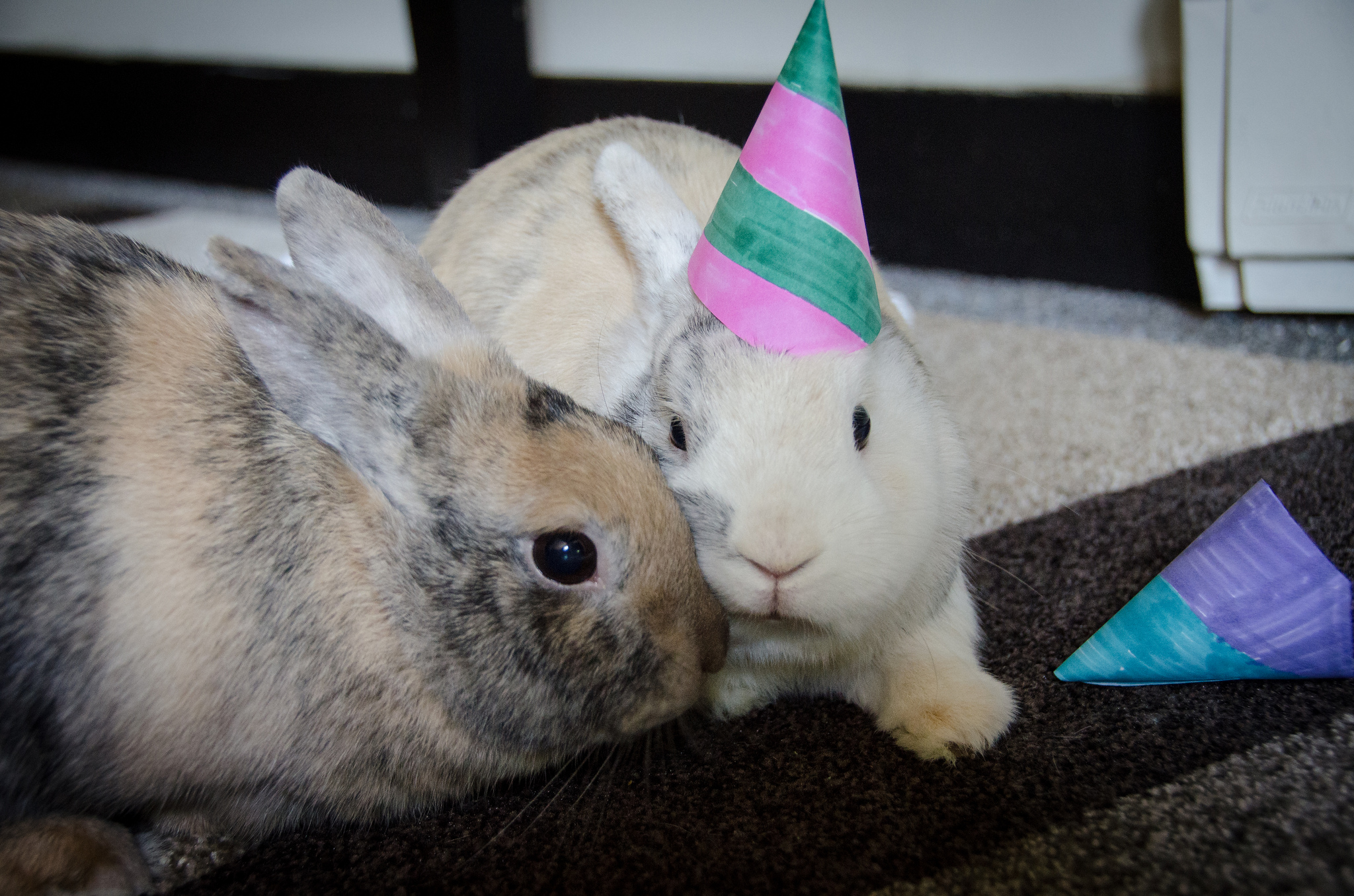 One Birthday Bunny Would Rather Snuggle Than Wear Her Hat