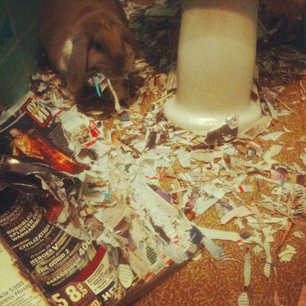 Bunny Loves Magazines to Bits