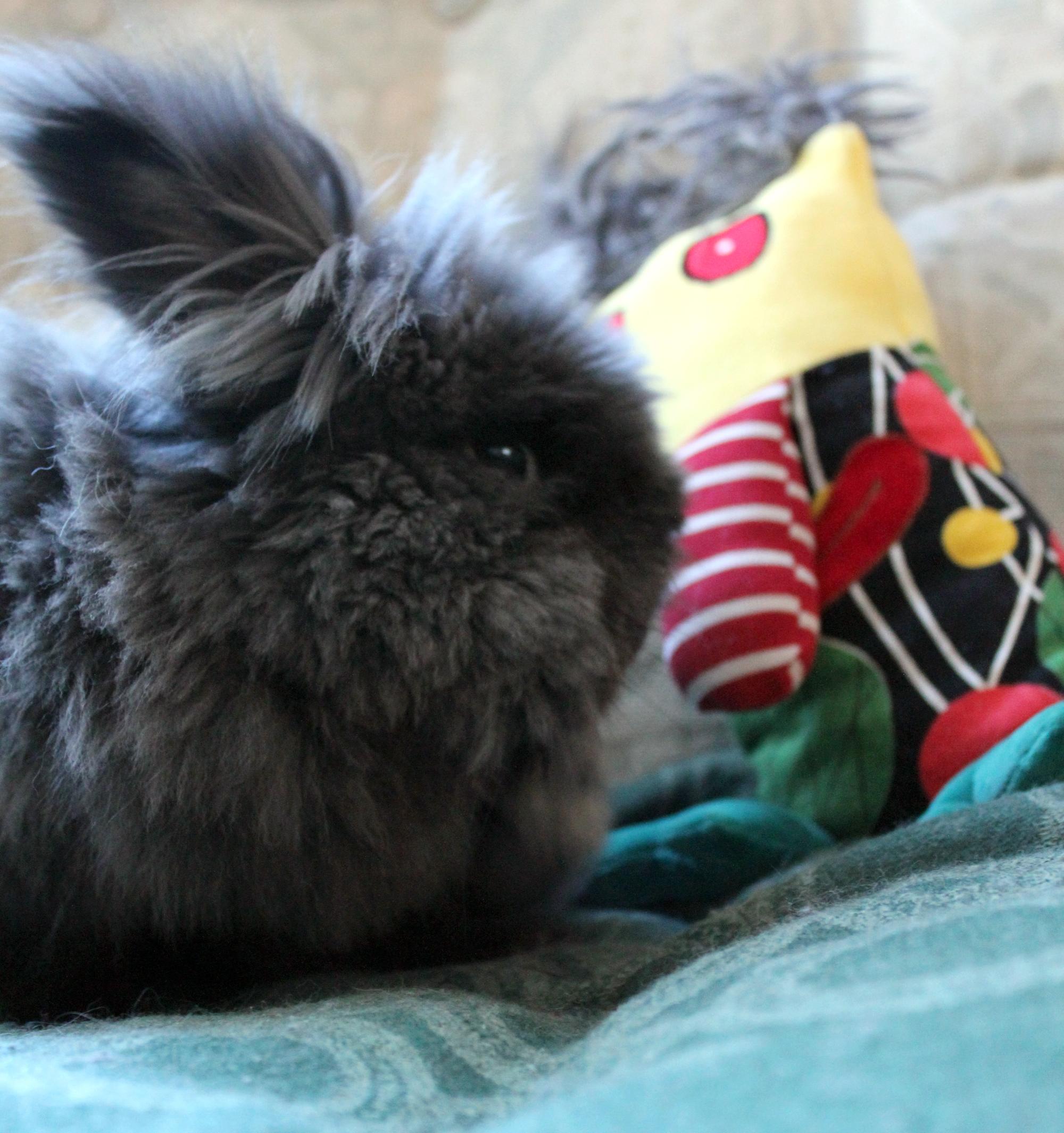 Super-Fluffy Bunny in Profile