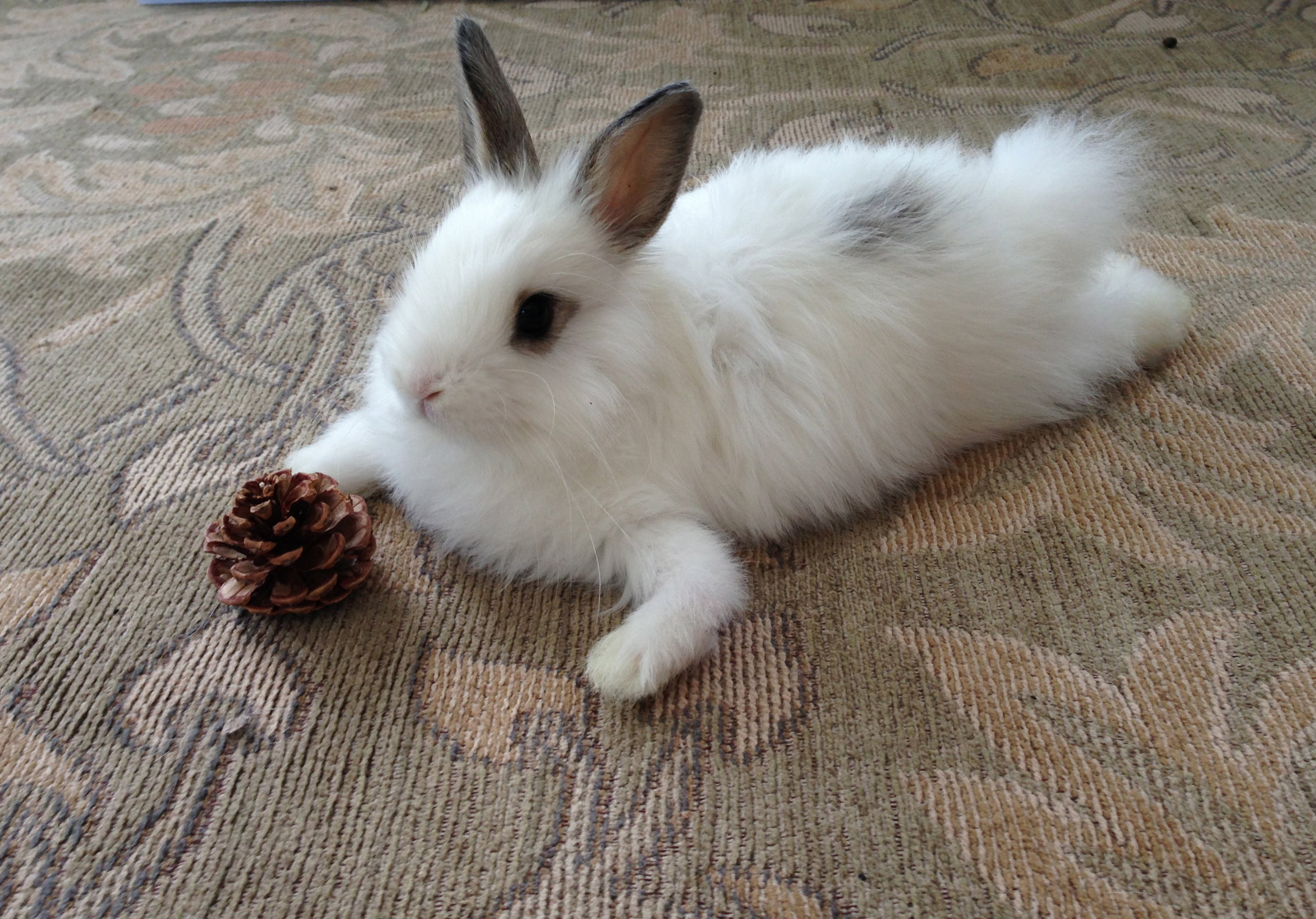 Bunny Hangs Out with Her Pinecone