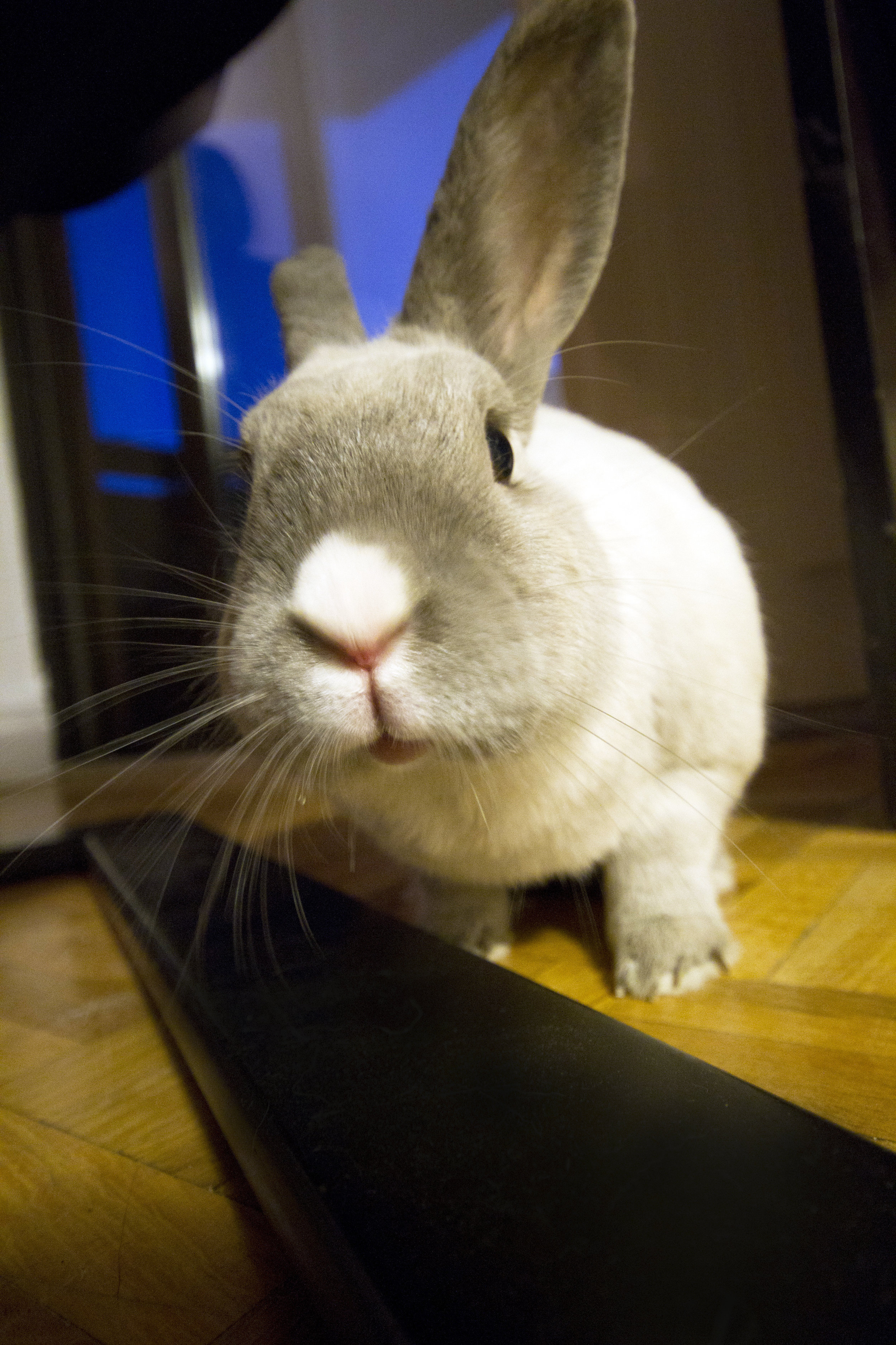 What Is That You Have There, Human? A Very Curious Thing Indeed!