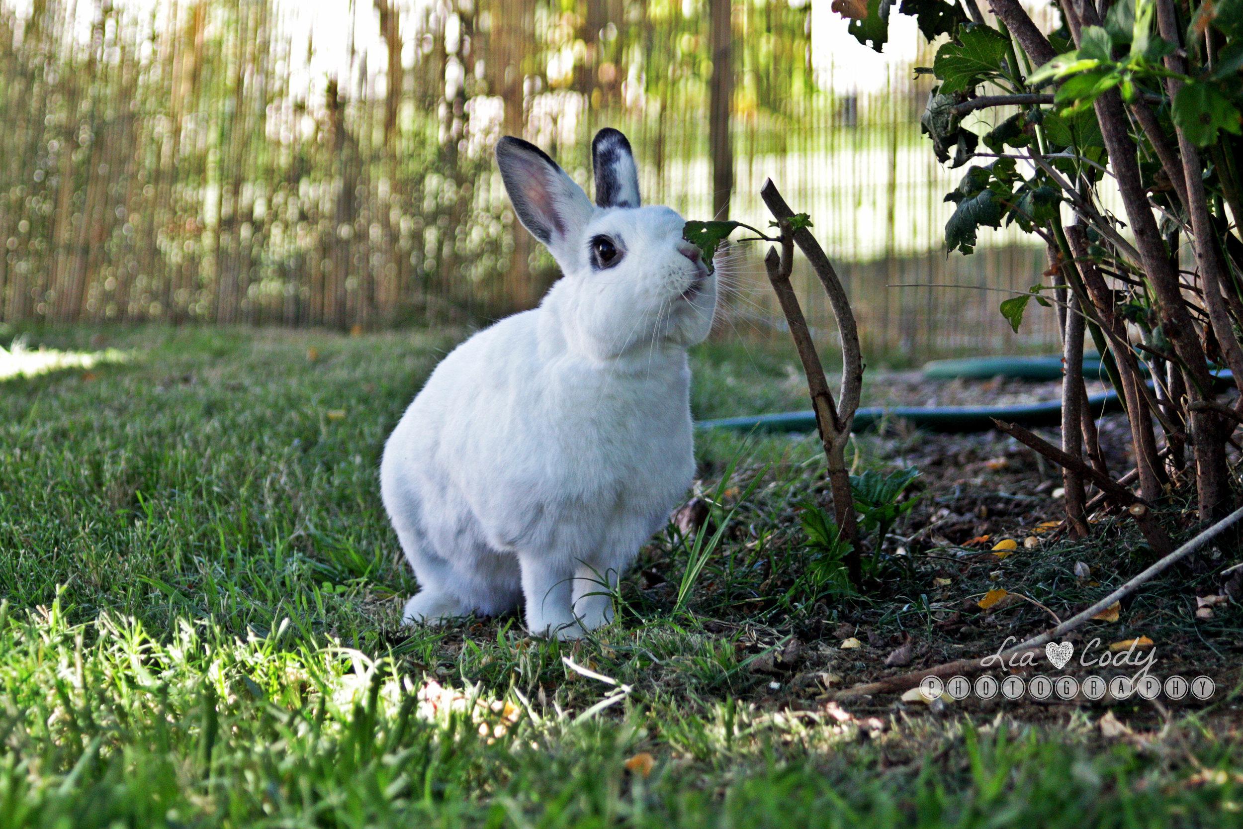 Bunny Sniffs a Leaf