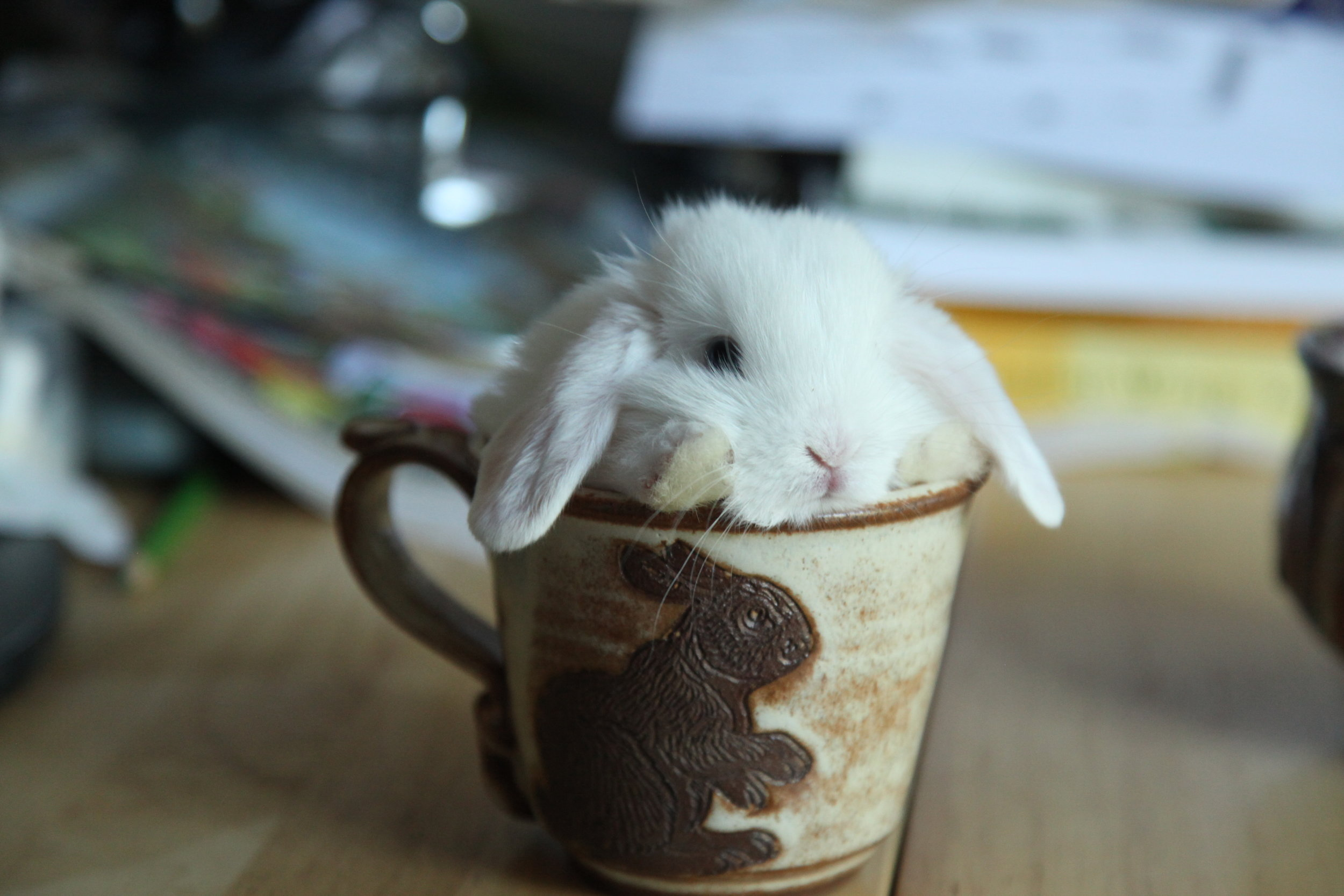 Lucky Human's Bunny Mug Comes with a Real Bunny! 1