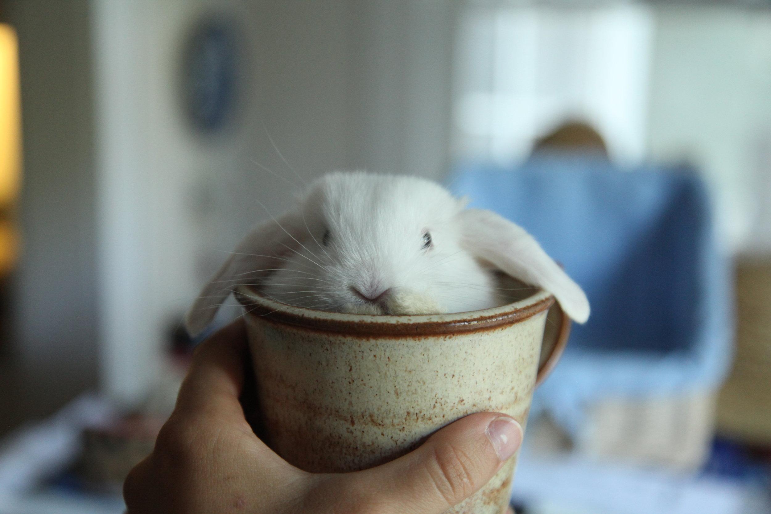 Lucky Human's Bunny Mug Comes with a Real Bunny! 2