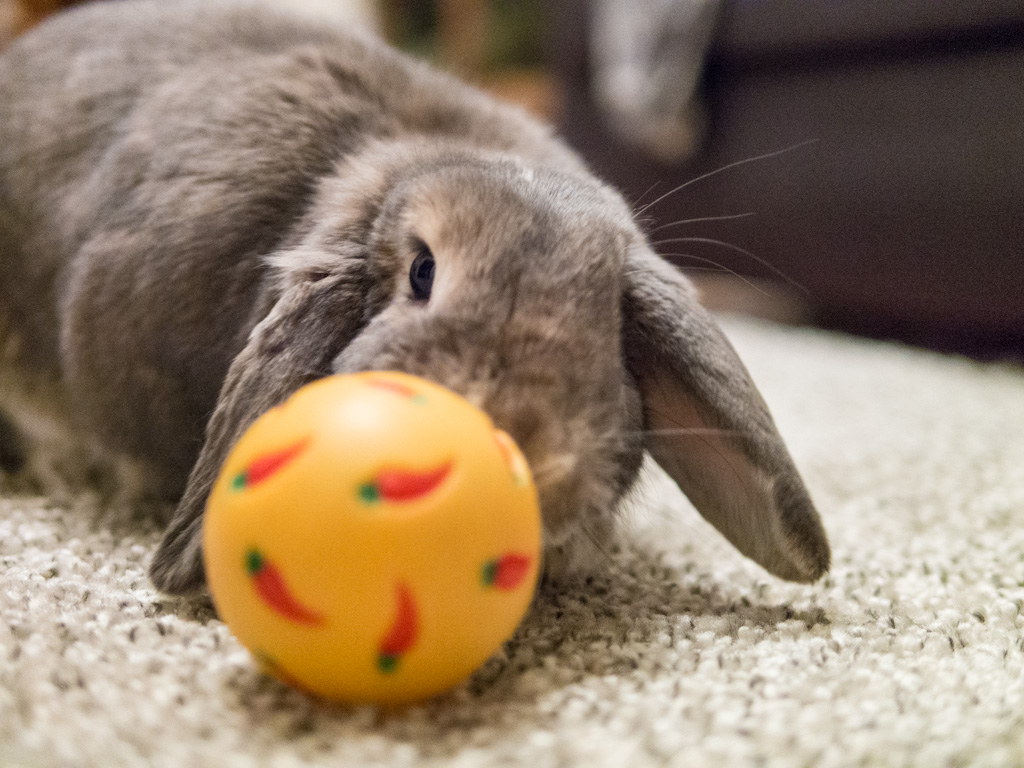 Bunny Plays with a Carrot Ball