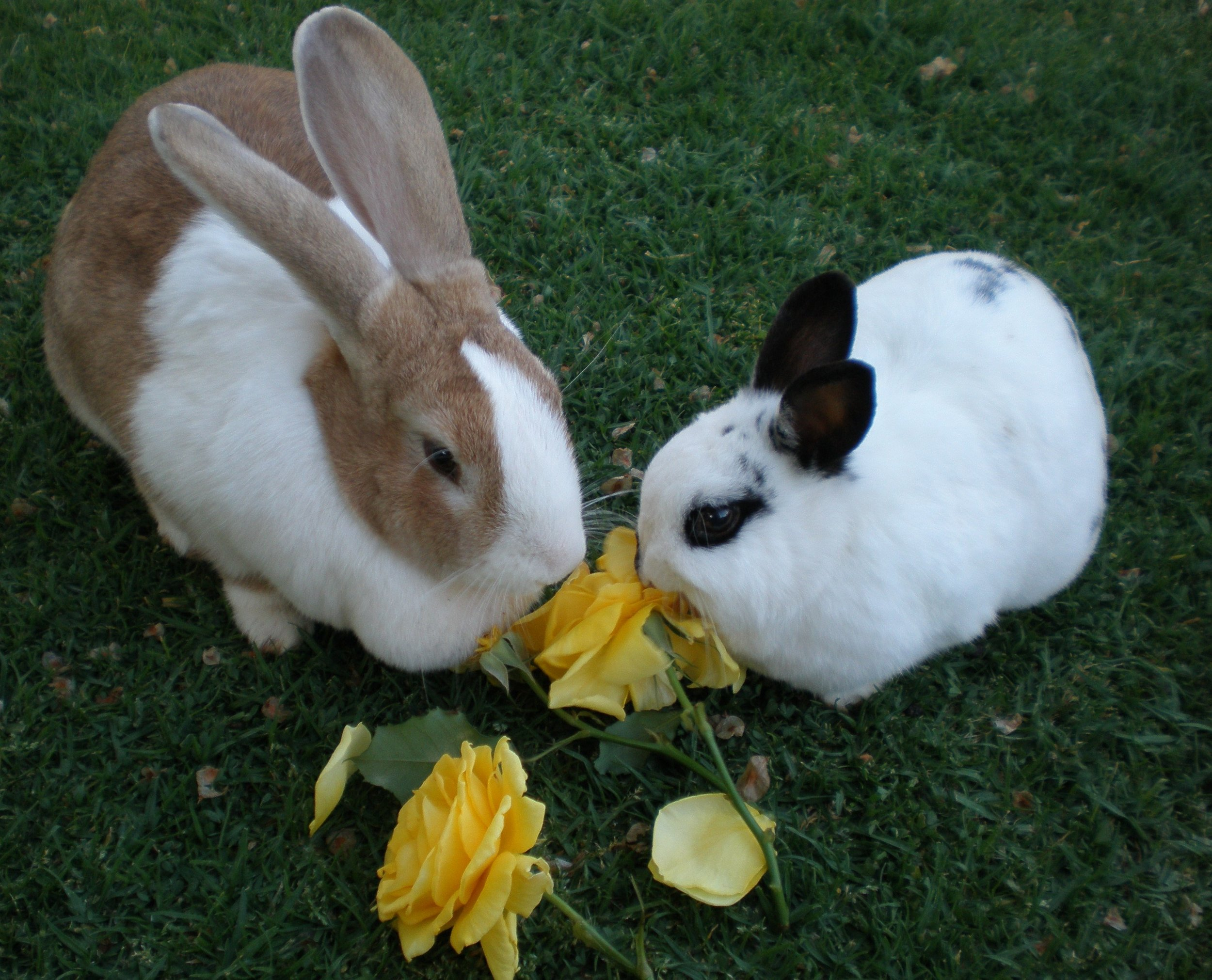 Bunnies Share a Flowery Treat