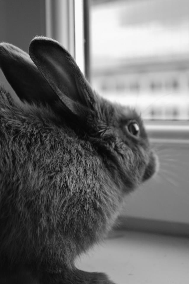 Bunny Has a Photoshoot at the Window 2