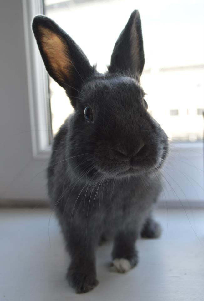 Bunny Has a Photoshoot at the Window 1